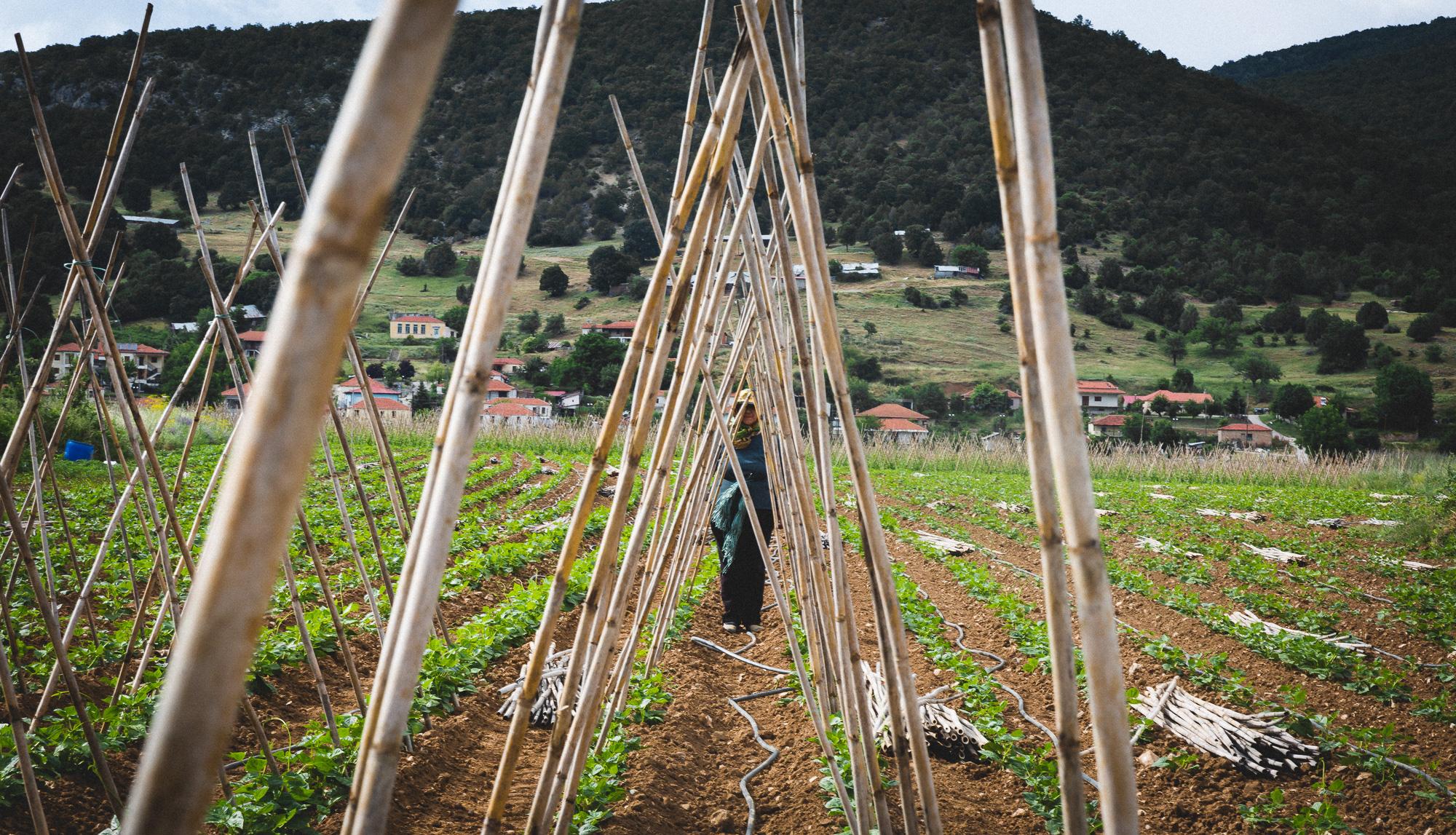 www.stemajourneys.com-prespes-2-greece-147.jpg