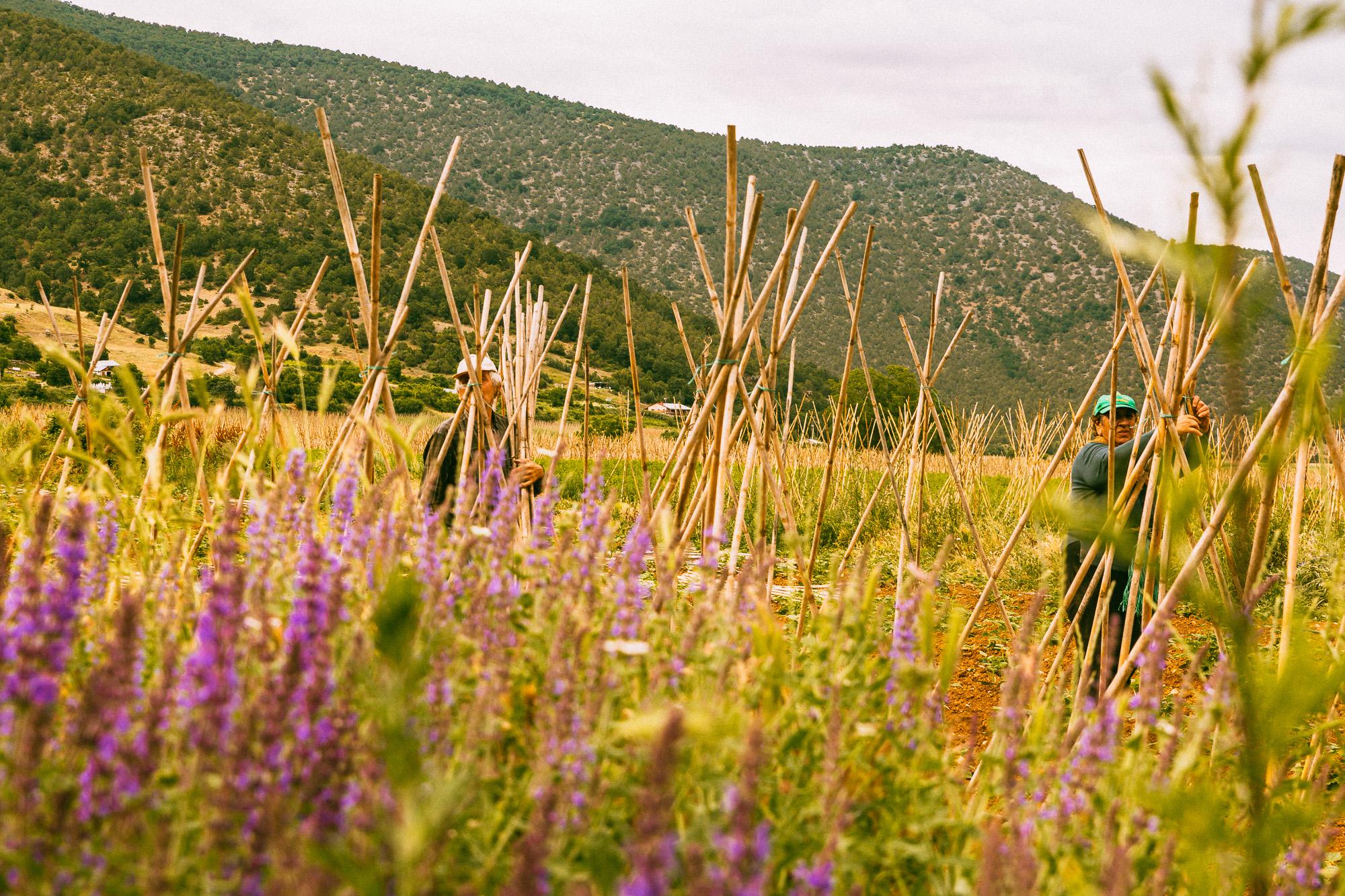 www.stemajourneys.com-prespes-2-greece-286.jpg
