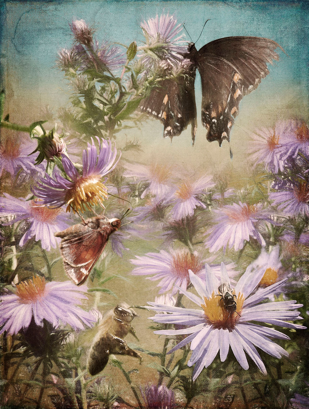 Among the Asters - Archival Pigment Print on Hahnemühle Fine Art Rag25