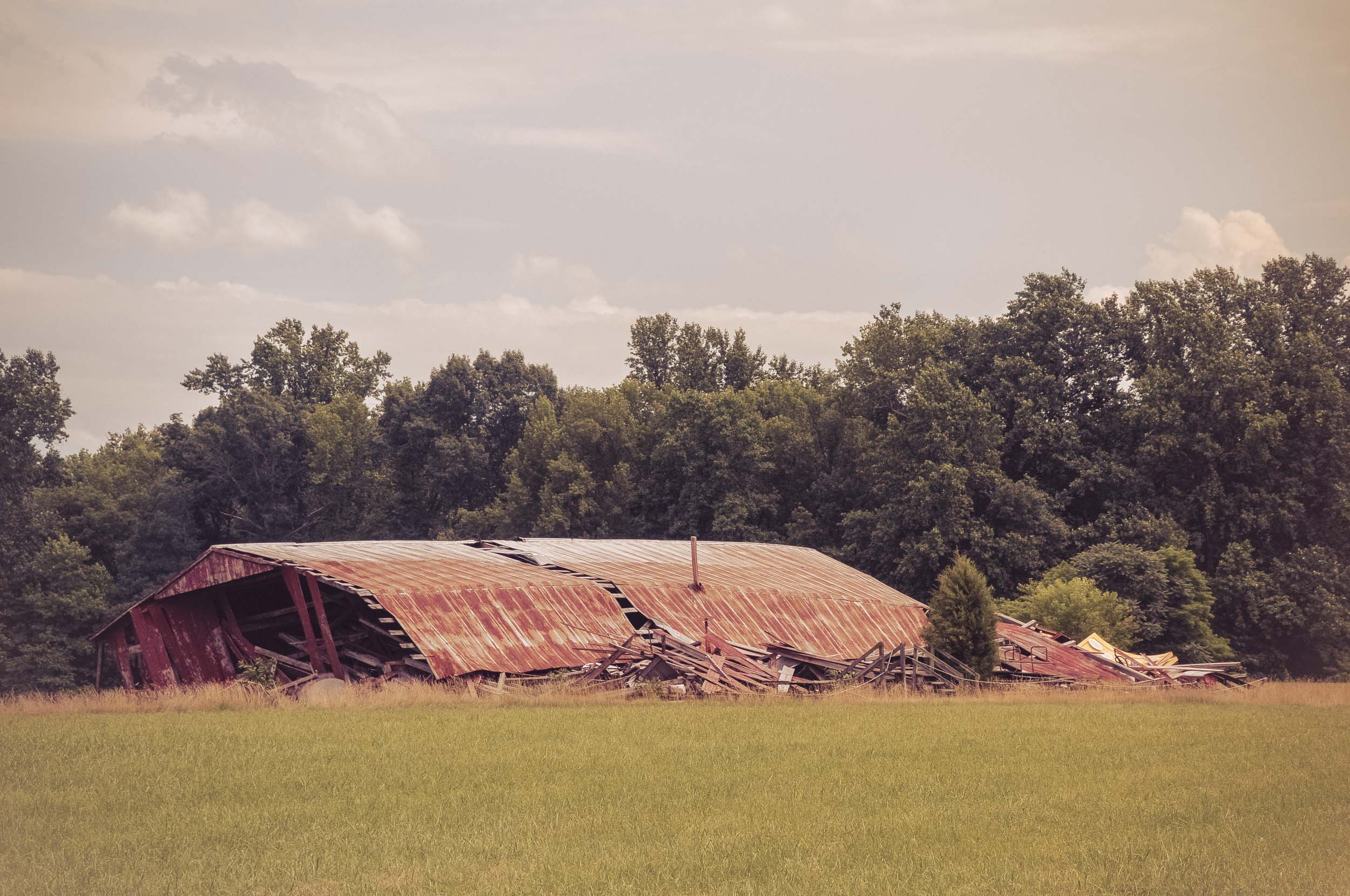 Collapsed Barn Photo: Rose Anderson, June 2018