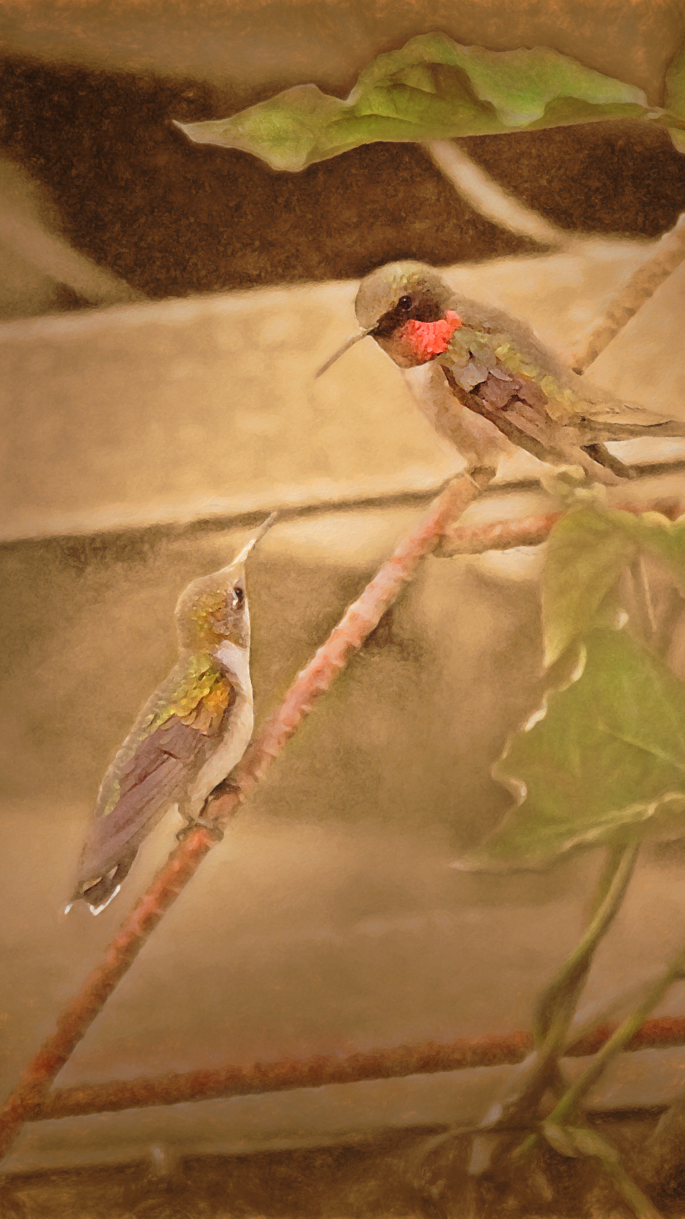 Study of Female and Male Hummingbirds Archival Pigment Print Rose Anderson, 2014