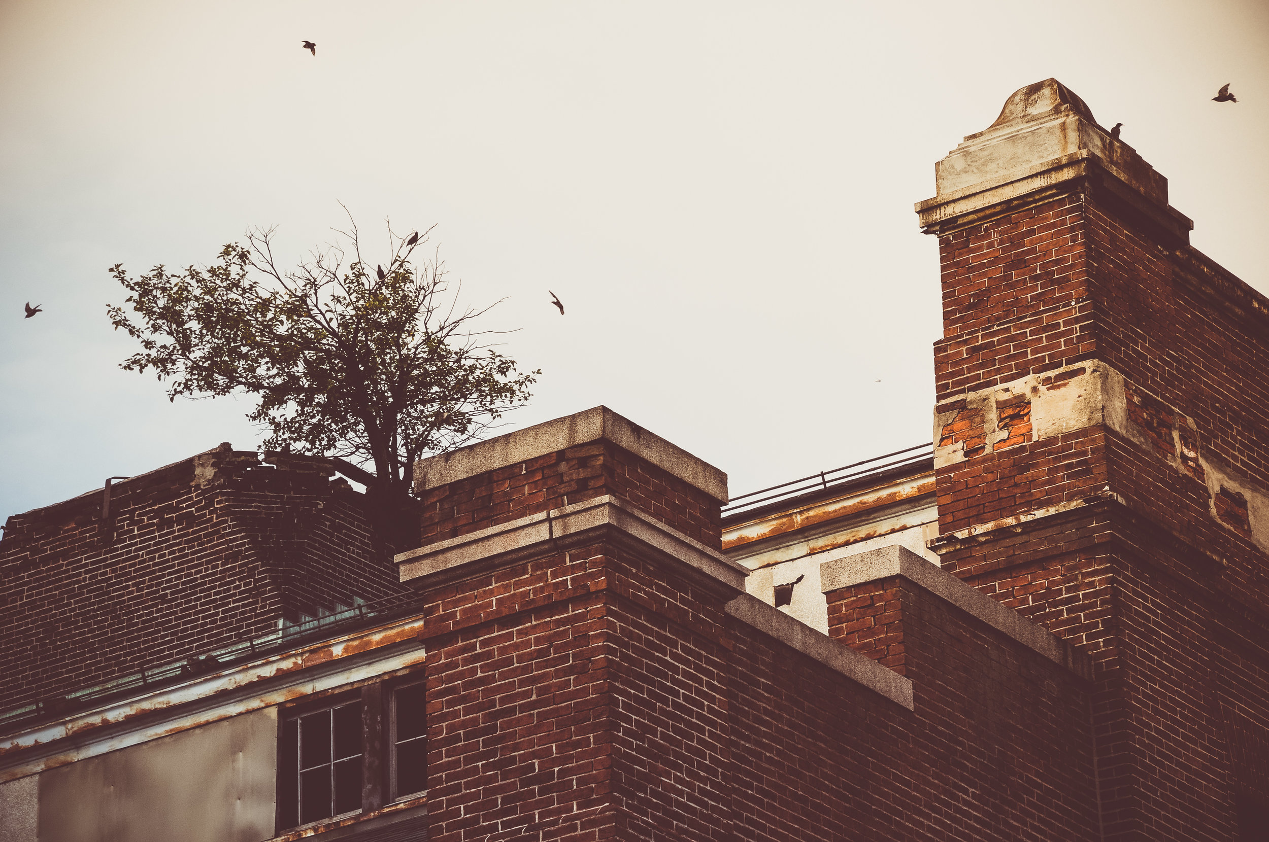 Birds flying around an abandoned building in Baltimore. Photo: Rose Anderson, August 2018