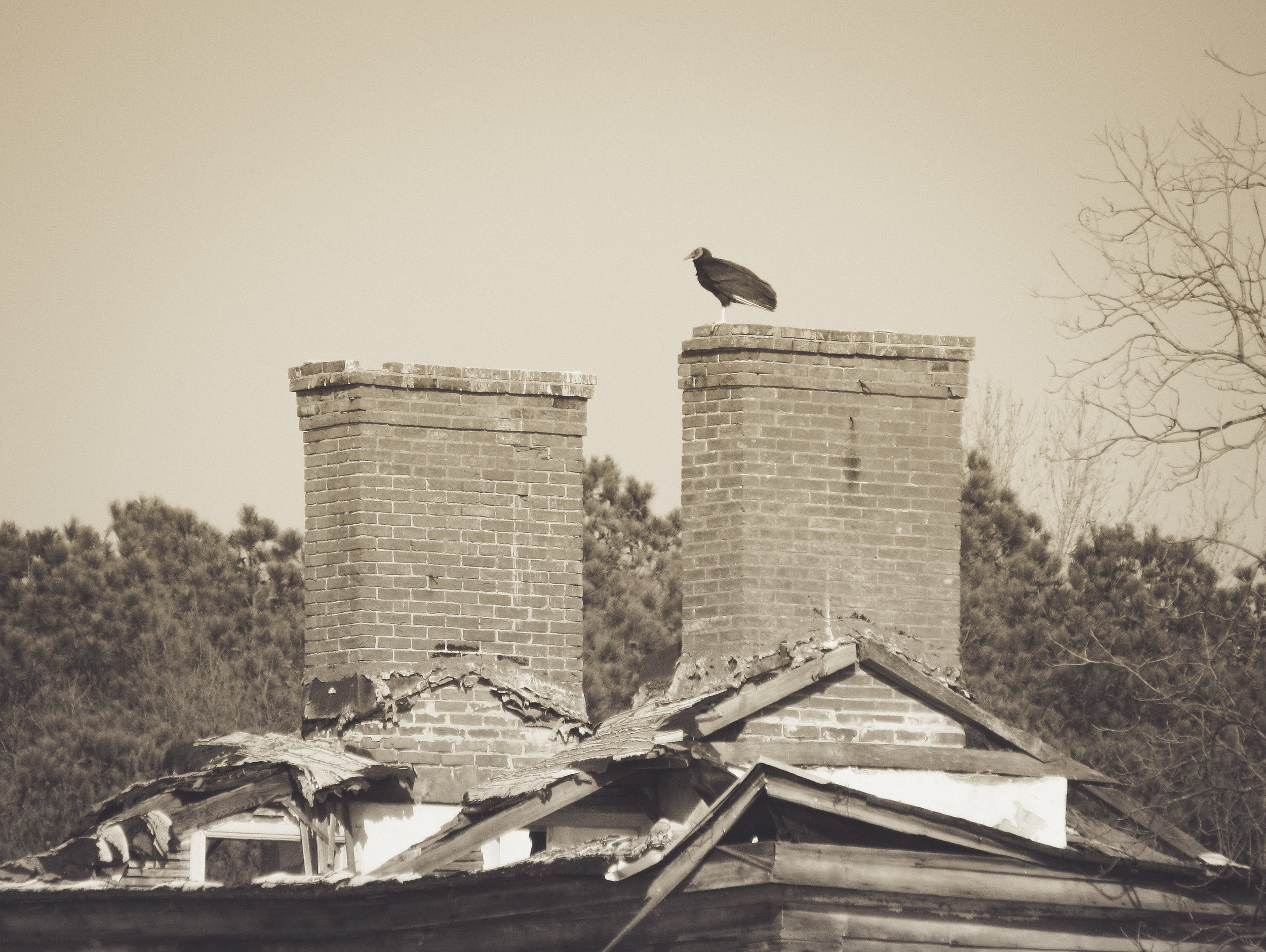 Domestic Ruin and Vulture Photo: Rose Anderson, 2012