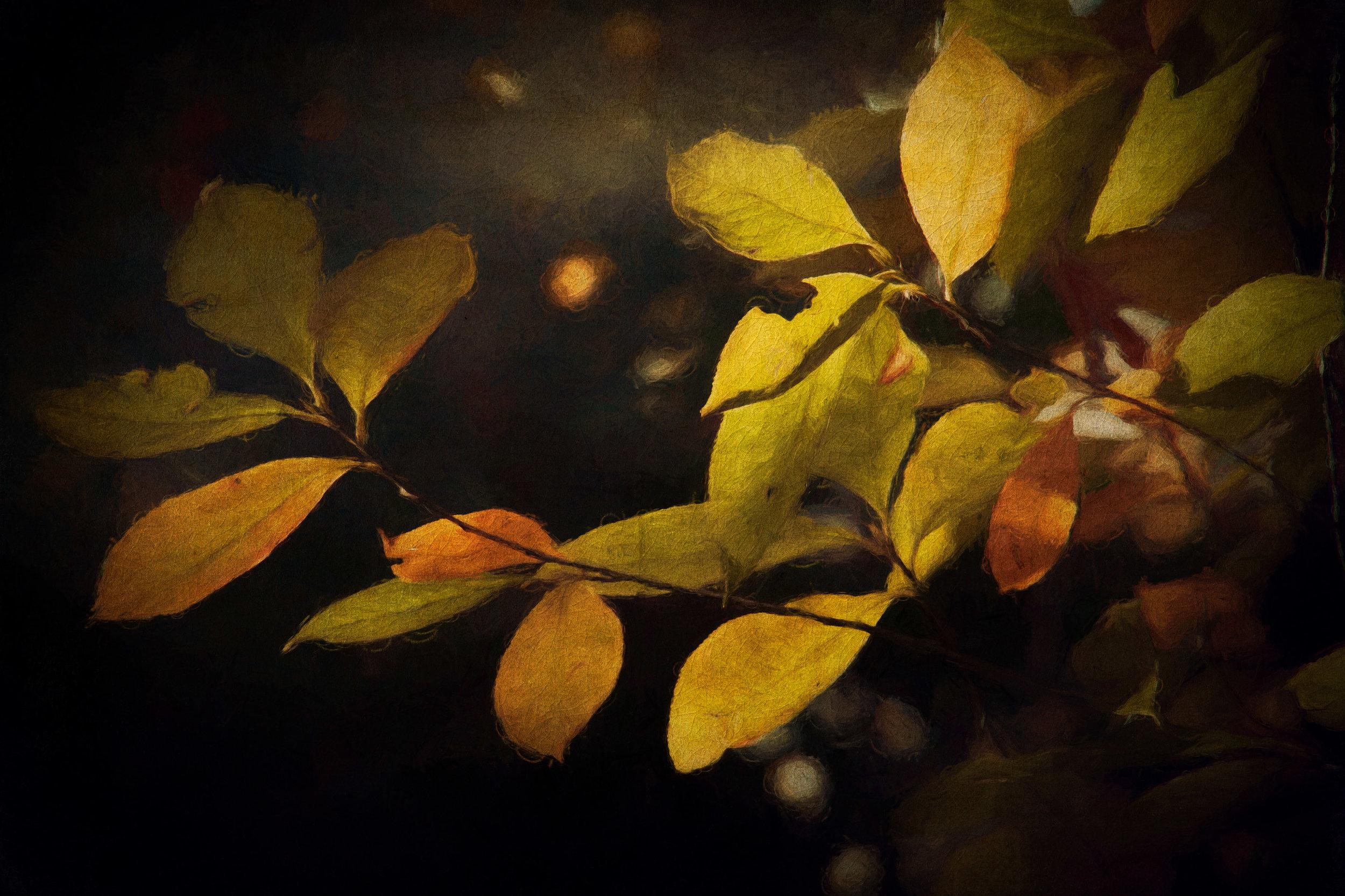 Leaves-8.jpg