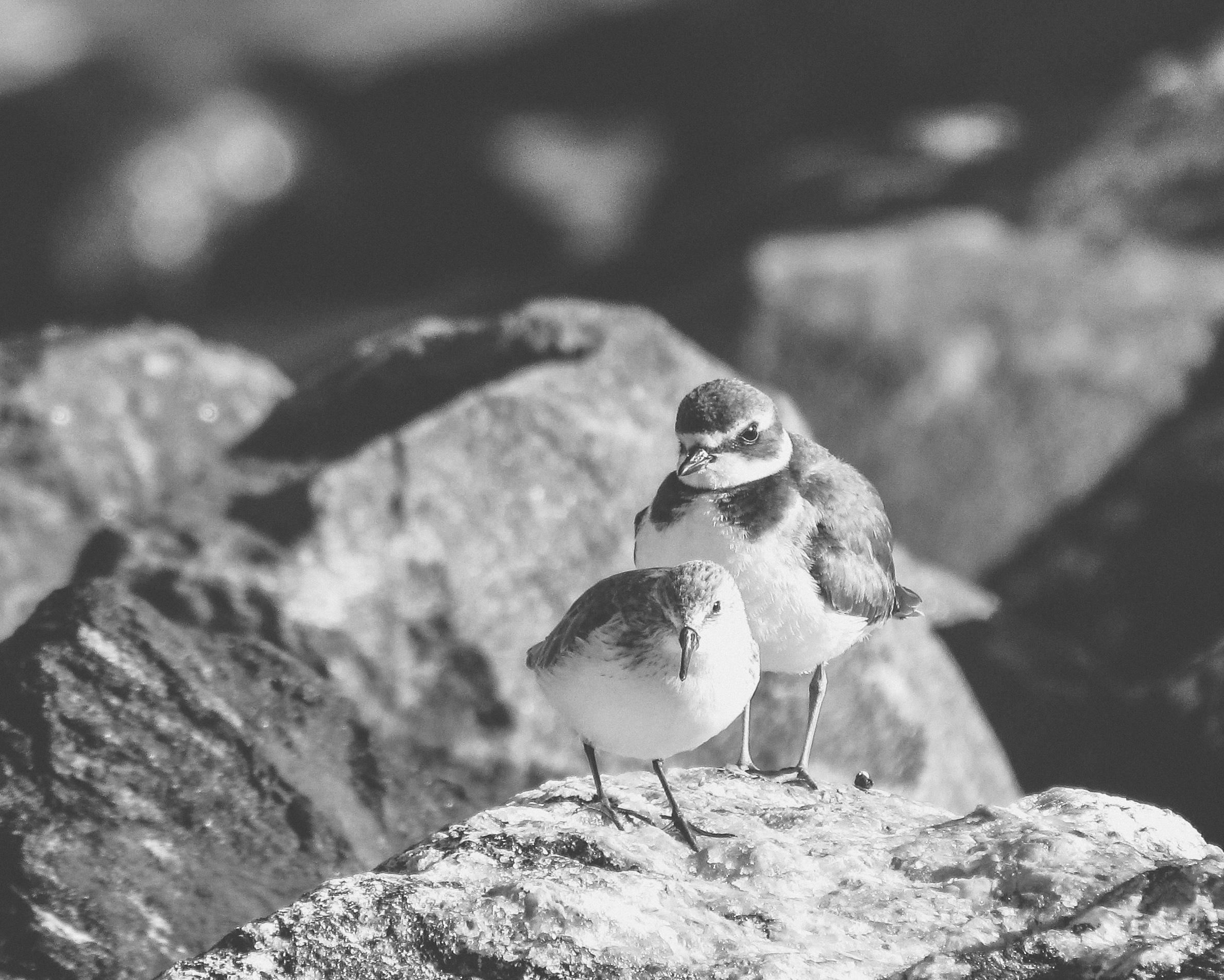 Two Shorebirds Photo: Rose Anderson
