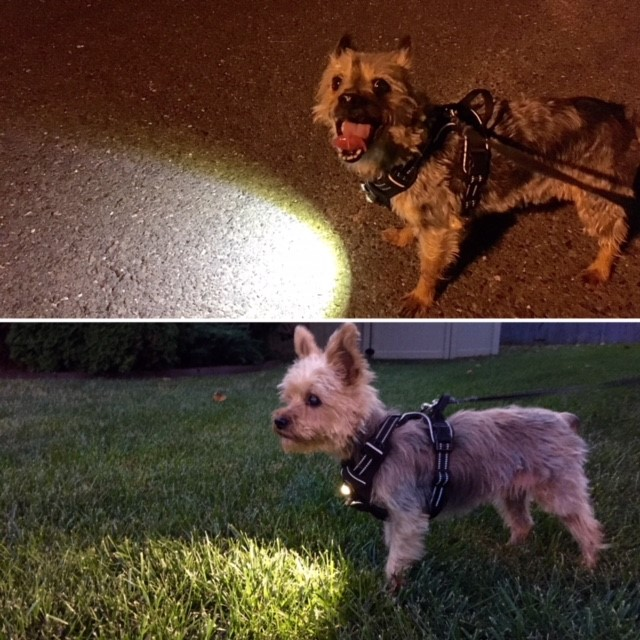 """- About Headlight Harness:At Headlight Harness, we have a simple goal: To keep you and your pet as safe as possible anywhere your adventure may take you.All of our products, from the Revolutionary, Patent-Pending Headlight Harness, to our Reflective Leashes and Collars, have all be designed around that core concept. We focus on Safety, Quality, and Comfort, and our products reflect those values. Our Harnesses are """"No Choke/No Pull"""", Highly Reflective, Light Weight, and include our patented, focused beam LED in the chest. The LED lights up the path ahead, helping you see in dark areas, and making you and your pet highly visible to any vehicles in the area which greatly reduces the risk of being struck. Our Headlight Harnesses are also compatible with any car or truck, and will keep your pet seated and secure during the ride, greatly reducing the risk of injury. Thousands of highly satisfied pets and owners have joined the Headlight Harness family, and trust us to keep their pets safe and secure no matter what their walk, car ride, or adventure may hold. Stay Seen. Stay Visible. Stay Safe."""