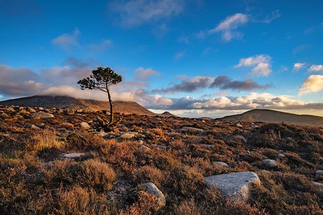 Lone tree - Mourne Mountains at sunset