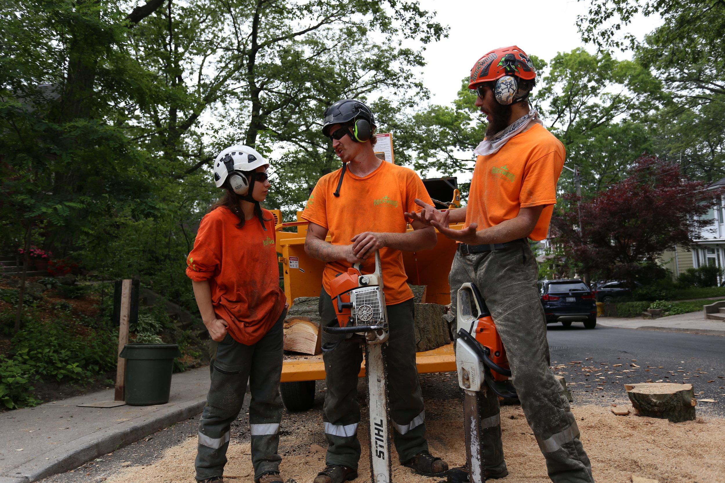 Fallen Tree Emergency? Call Us Immediately! 647-631-4441