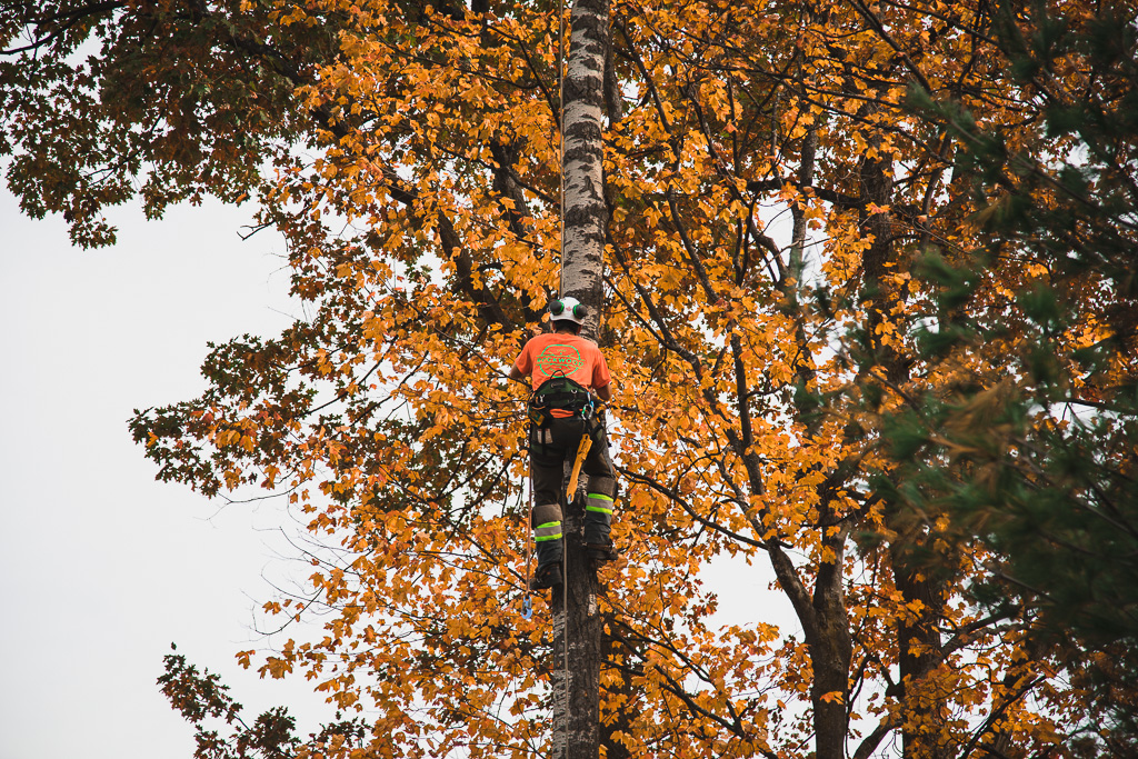 Arborist Reports as required by the City of Toronto and other Municipalities