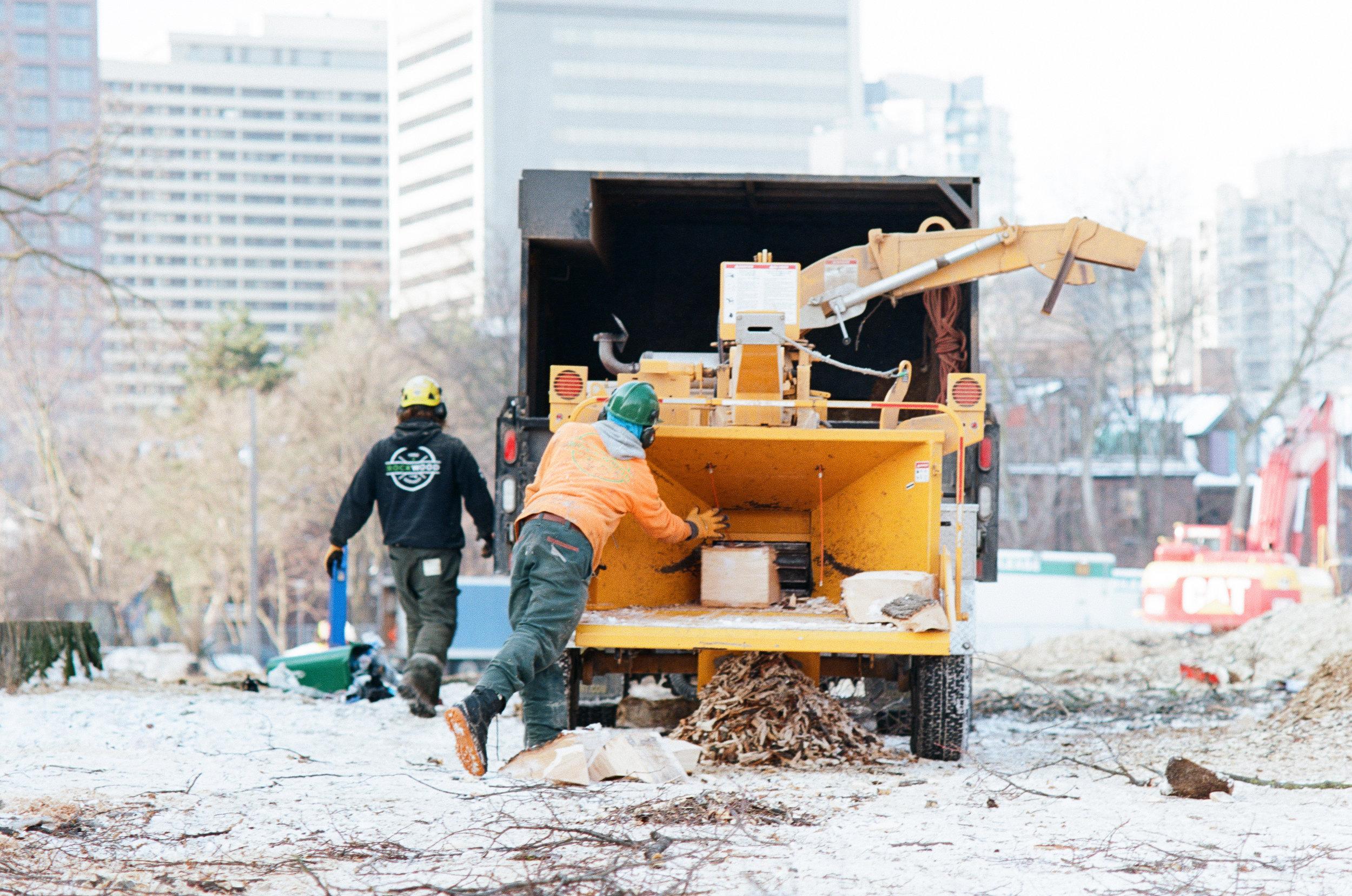 Rockwood Tree Services Toronto (21).jpg