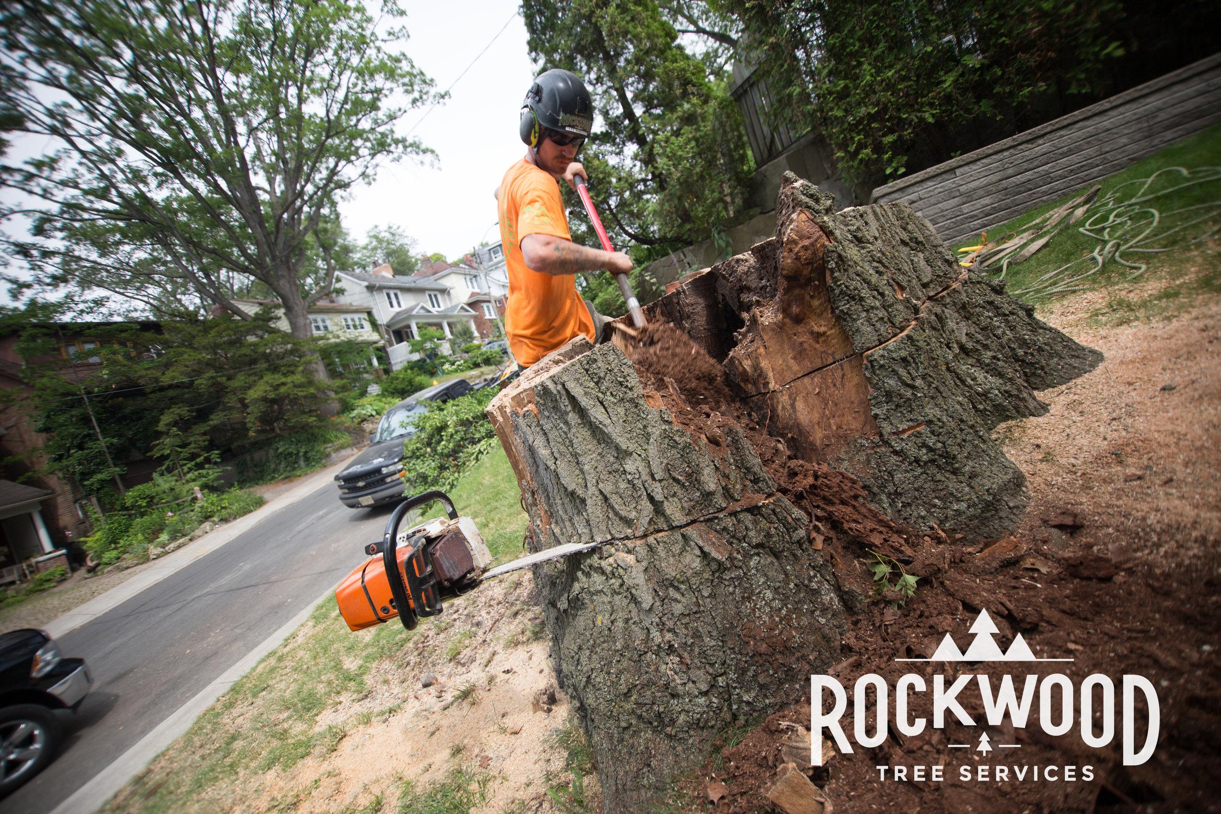 Rockwood Tree Services (292 of 351).jpg