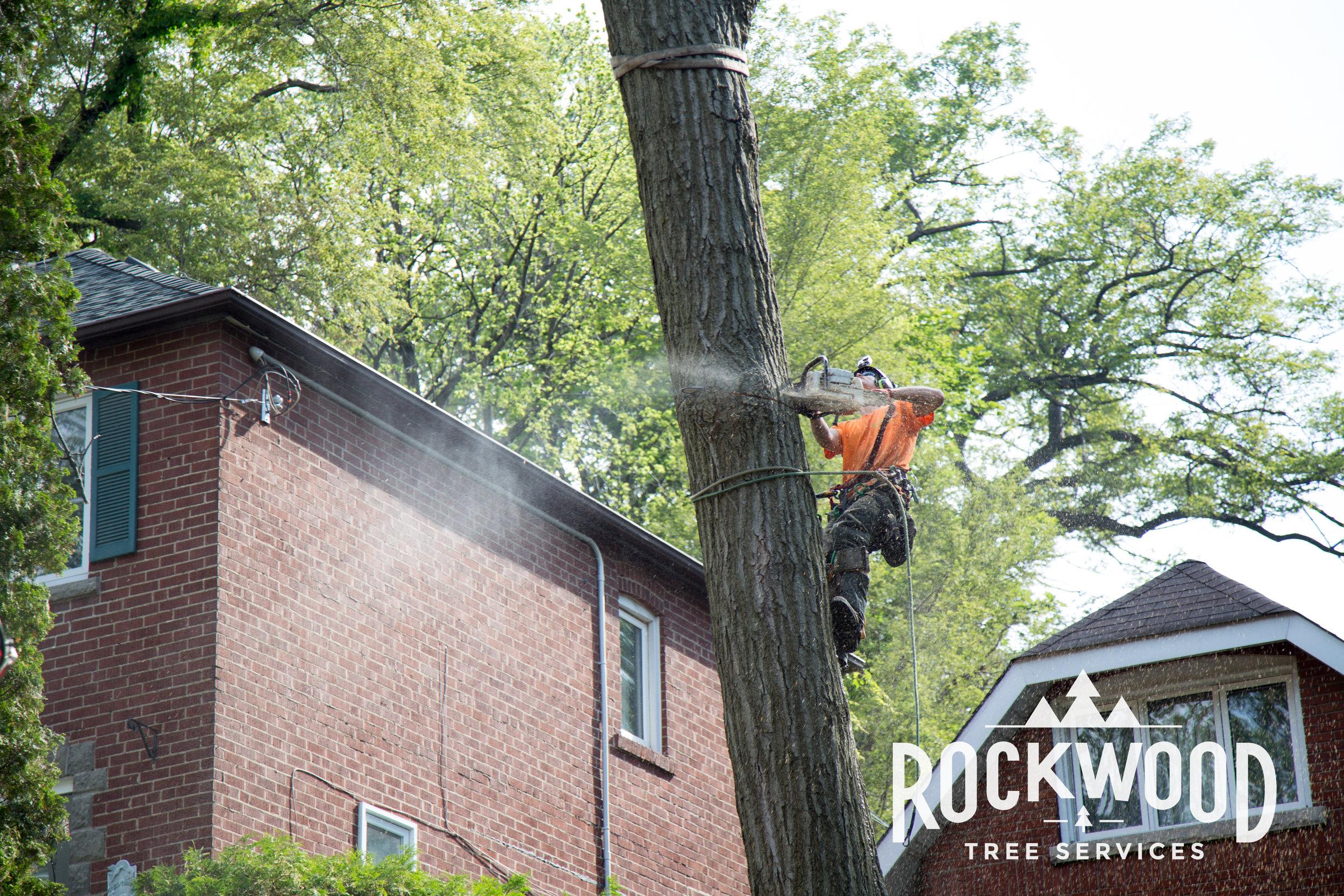 Rockwood Tree Services (22 of 351).jpg