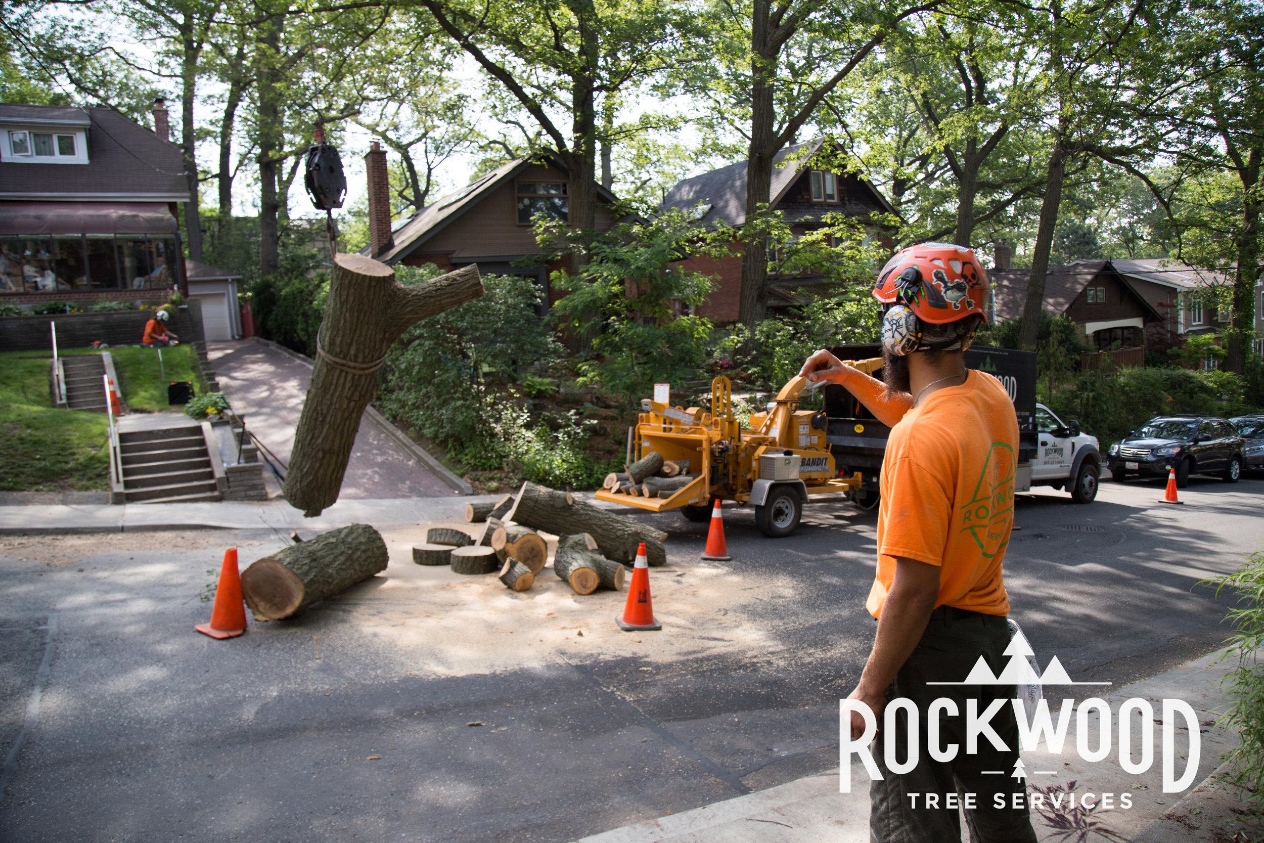 Rockwood Tree Services (42 of 351).jpg