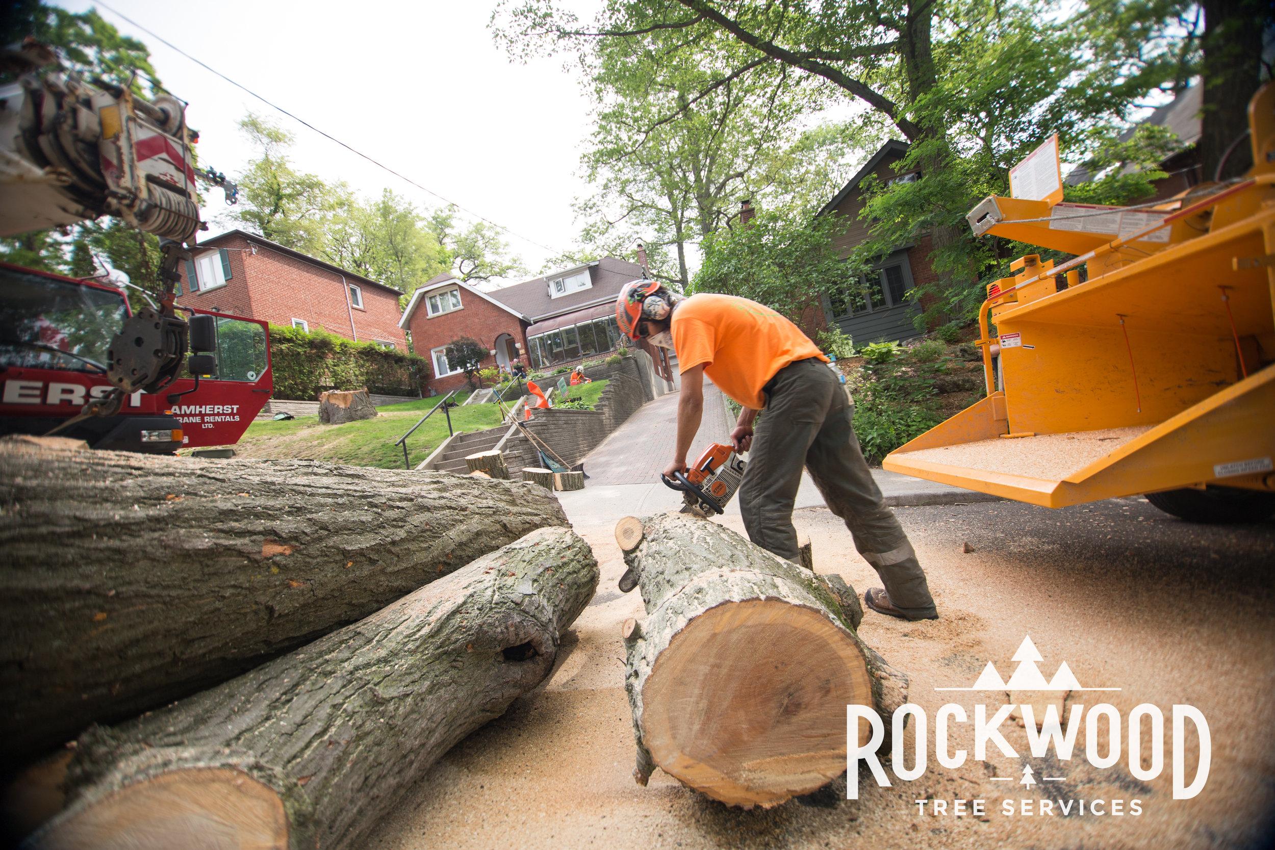 Rockwood Tree Services (172 of 351).jpg