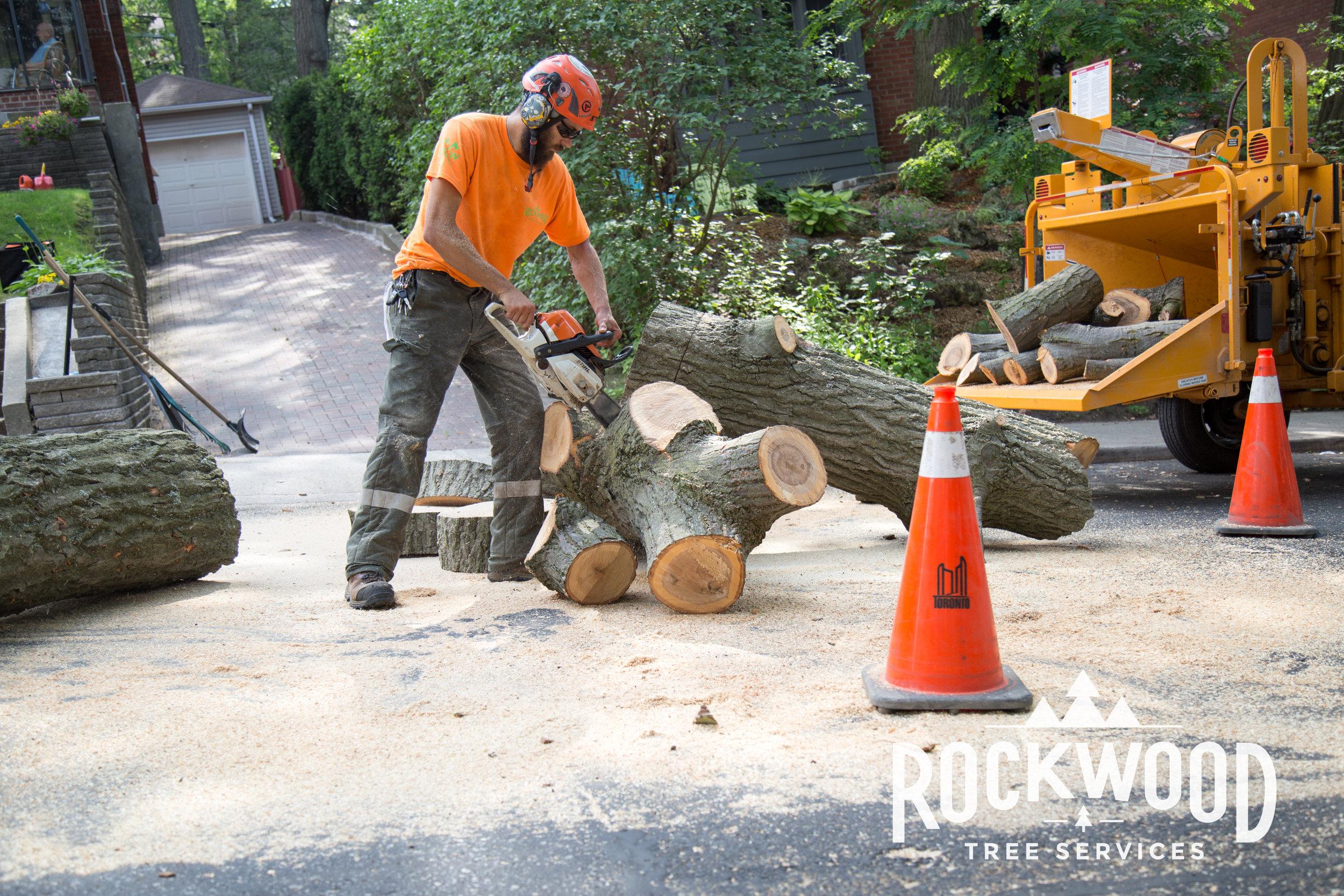 Rockwood Tree Services (20 of 351).jpg