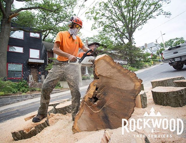 The warm weather is finally on it's way!  Look for the orange! You will see Rockwood across the GTA and out in full force this Spring! 🔶🔸🔶 https://www.rockwoodtree.services/