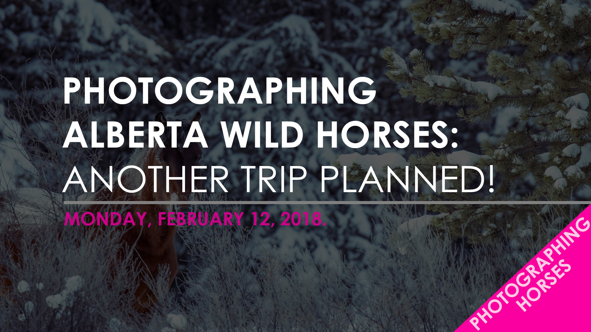 Blog Template - wild horses - trip planned.jpg