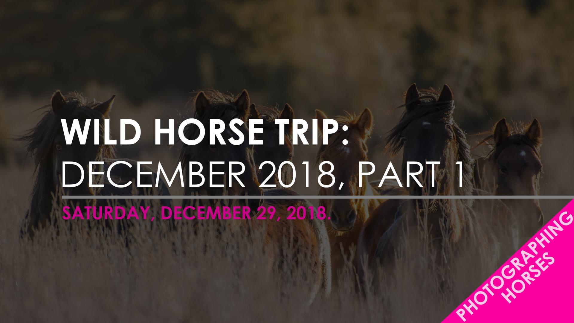 WILD HORSE - DEC - PART 1.jpg