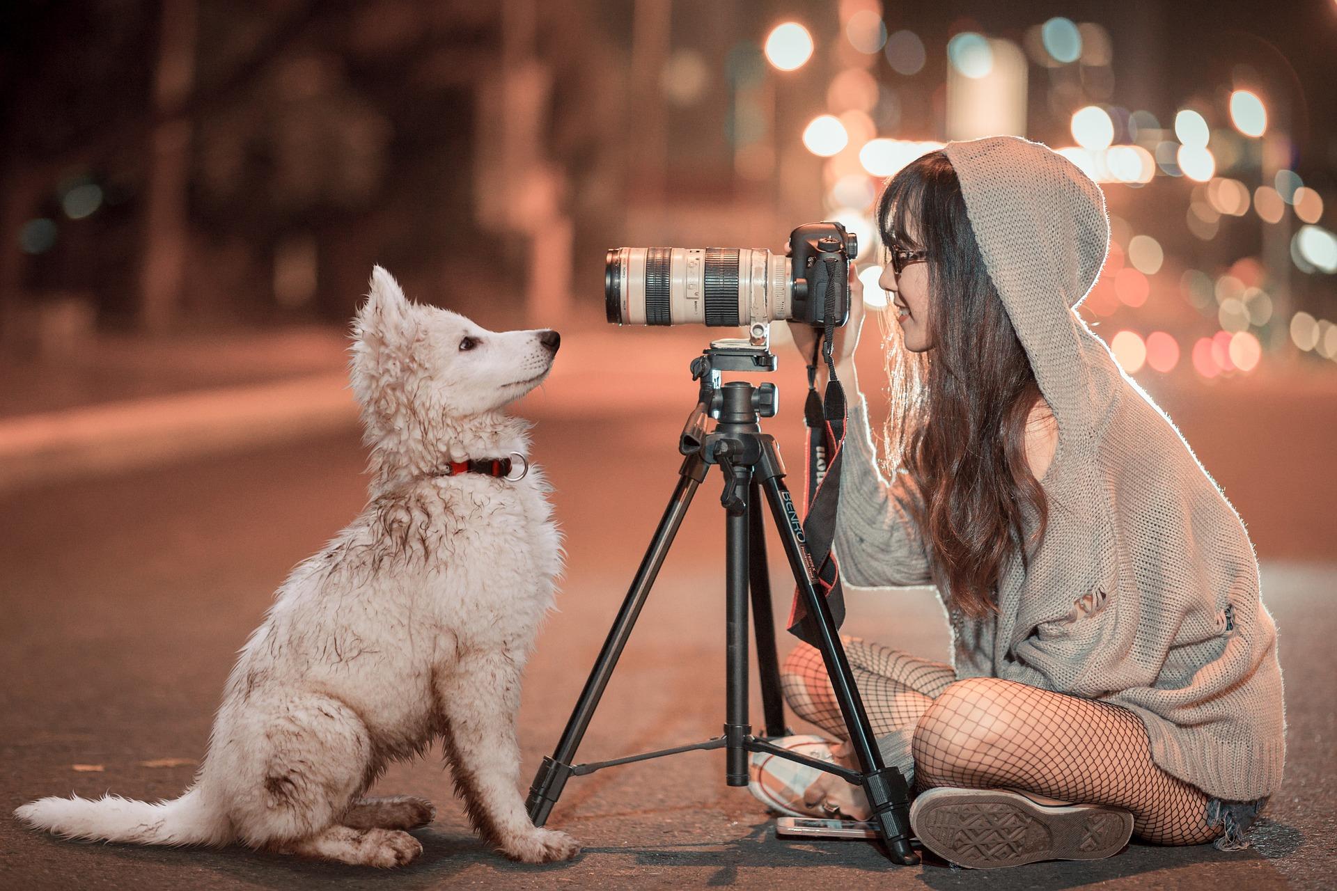puppy-3688871_1920.jpg