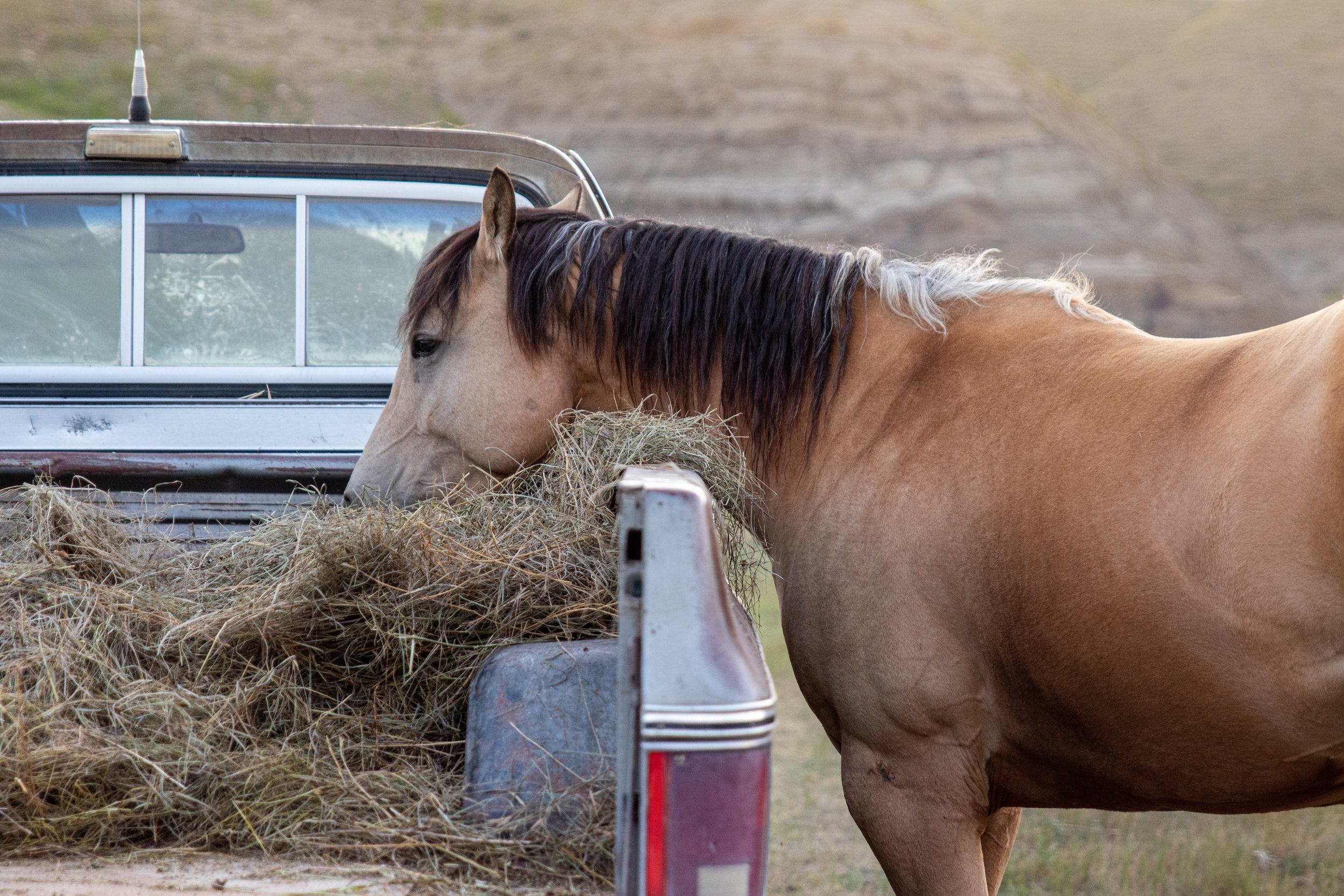 2019 Horses Being Horses -