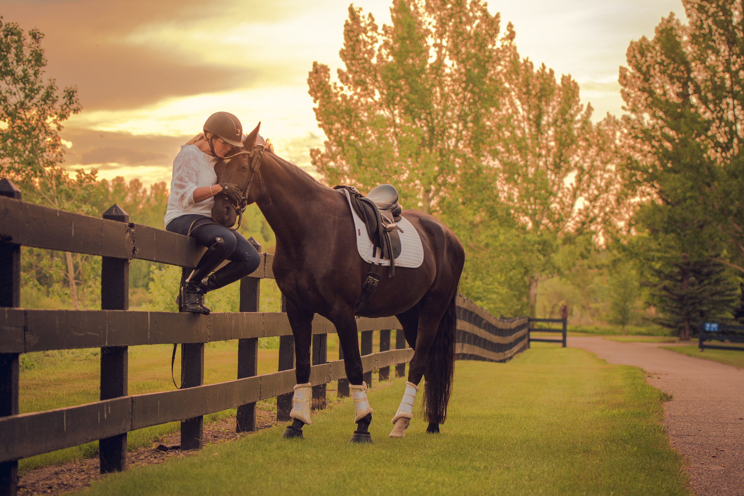 2019 Equine Portraiture -