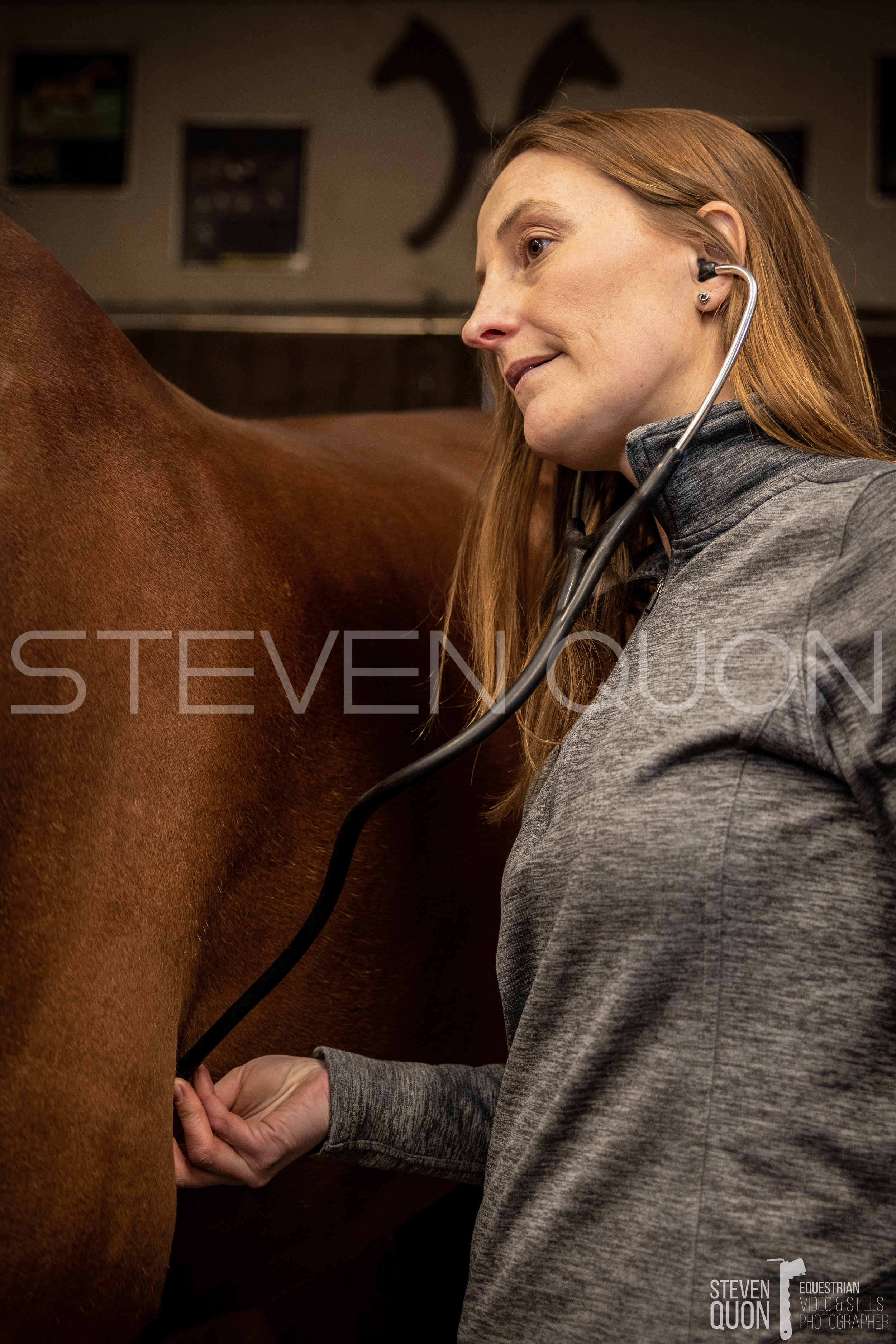 TD Equine Veterinary Group -