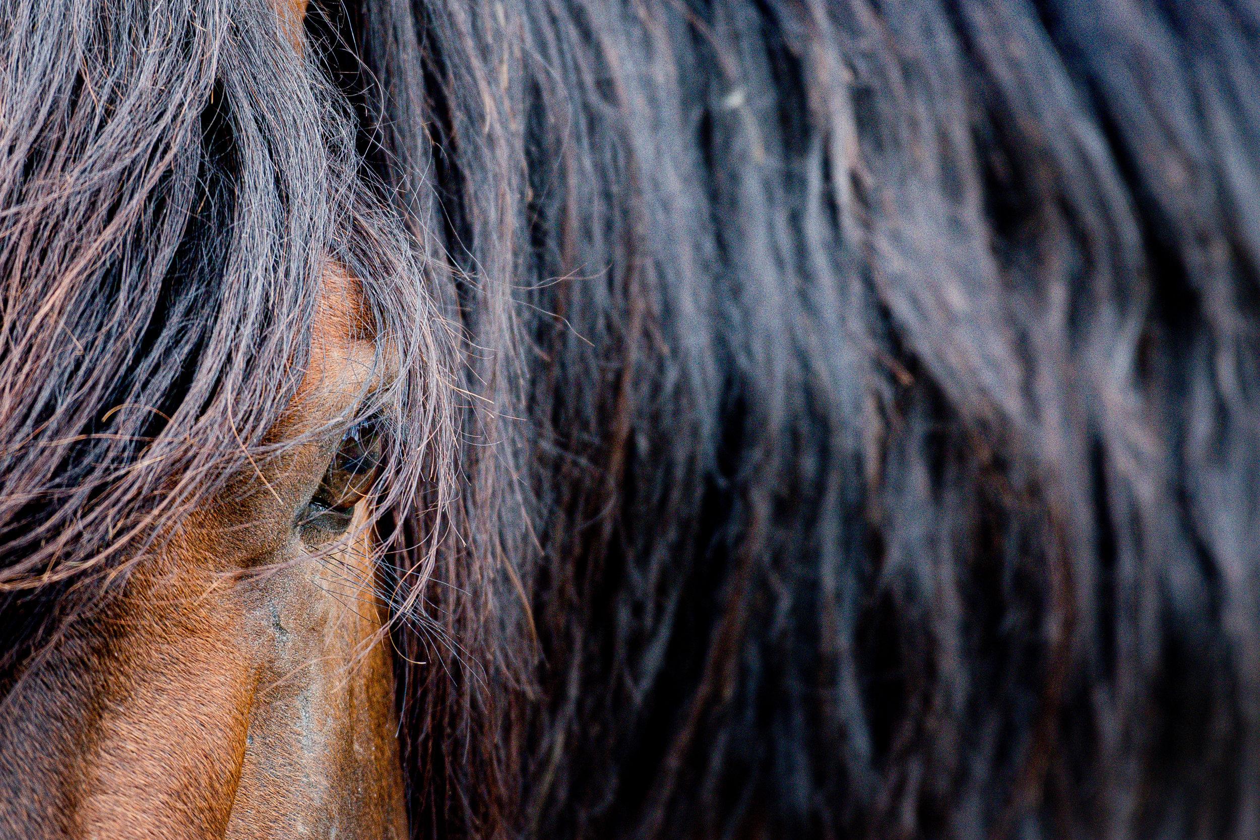 2019 Wild Horses -