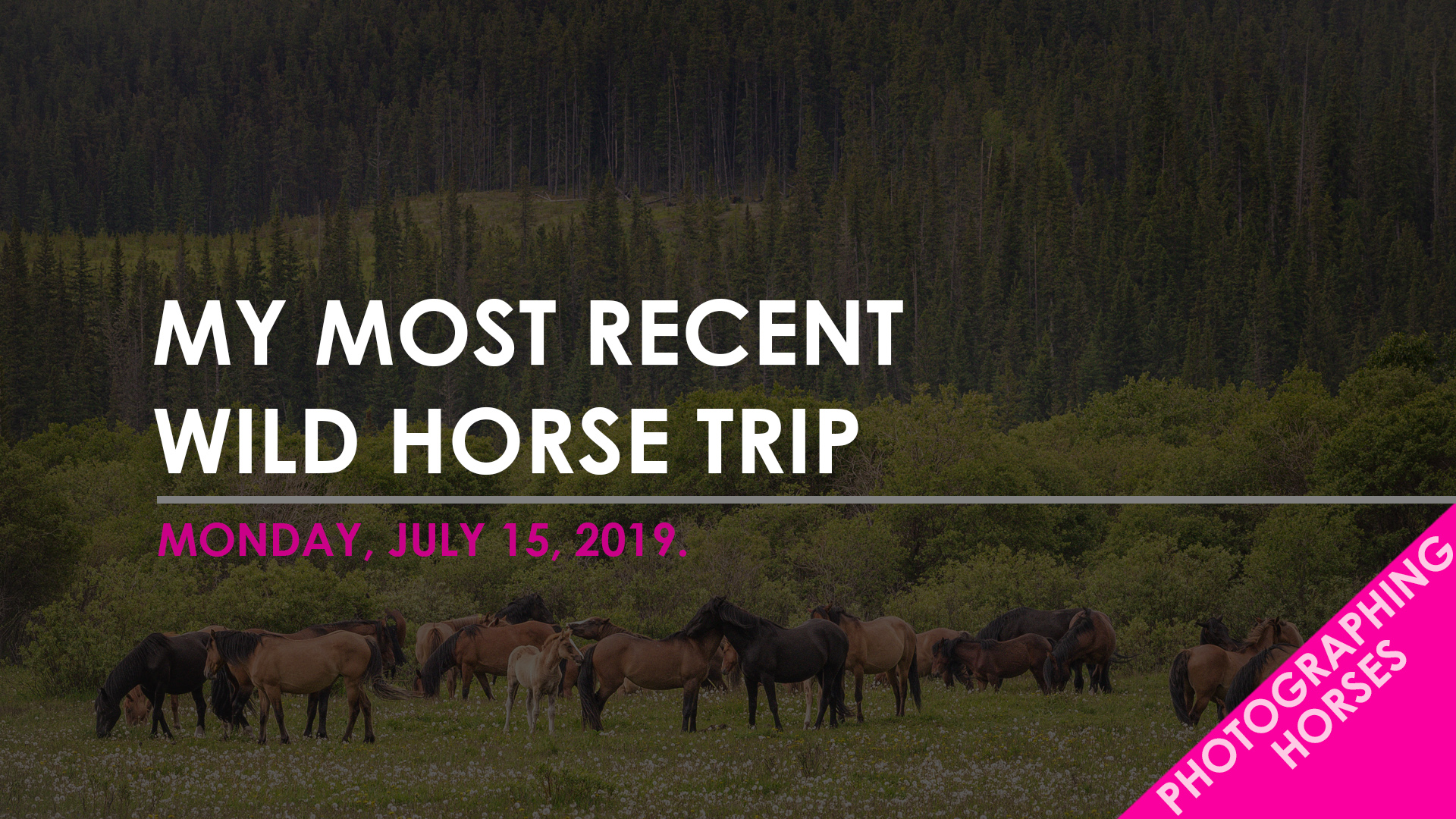 Blog Template - Wild Horse Trip July.jpg