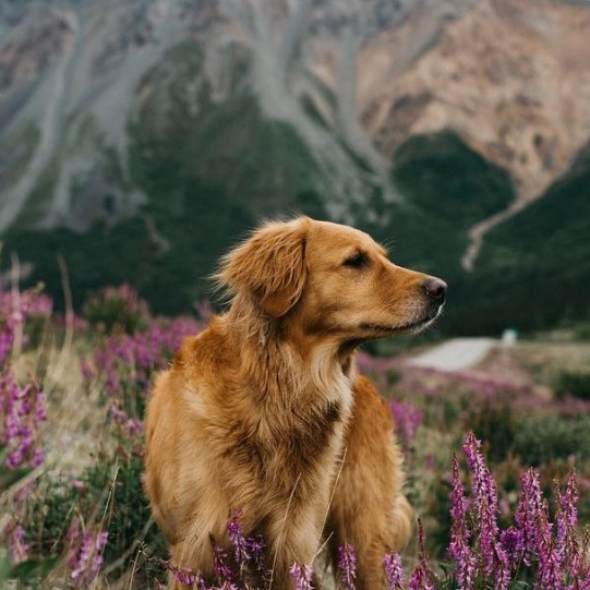 7 Dog-Approved Ways to Celebrate Earth Day - After all, we have much to thank Mother Earth for, particularly the existence of dogs. Read More