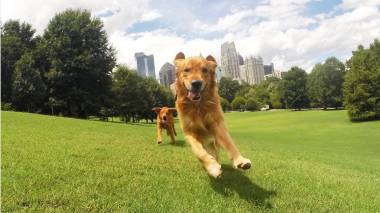 Plenty of Parks for Pups - Pups are sure to have a howling good time at Atlanta's numerous dog-friendly parks.Photo by Southern Living