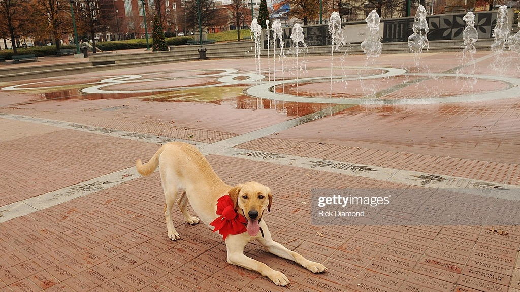 Atlanta's Unwavering Loyaltyto Labs - Labrador Retrievers are seemingly just as much of Atlanta staple as Coca-Cola and boiled peanuts.Photo by Getty Images