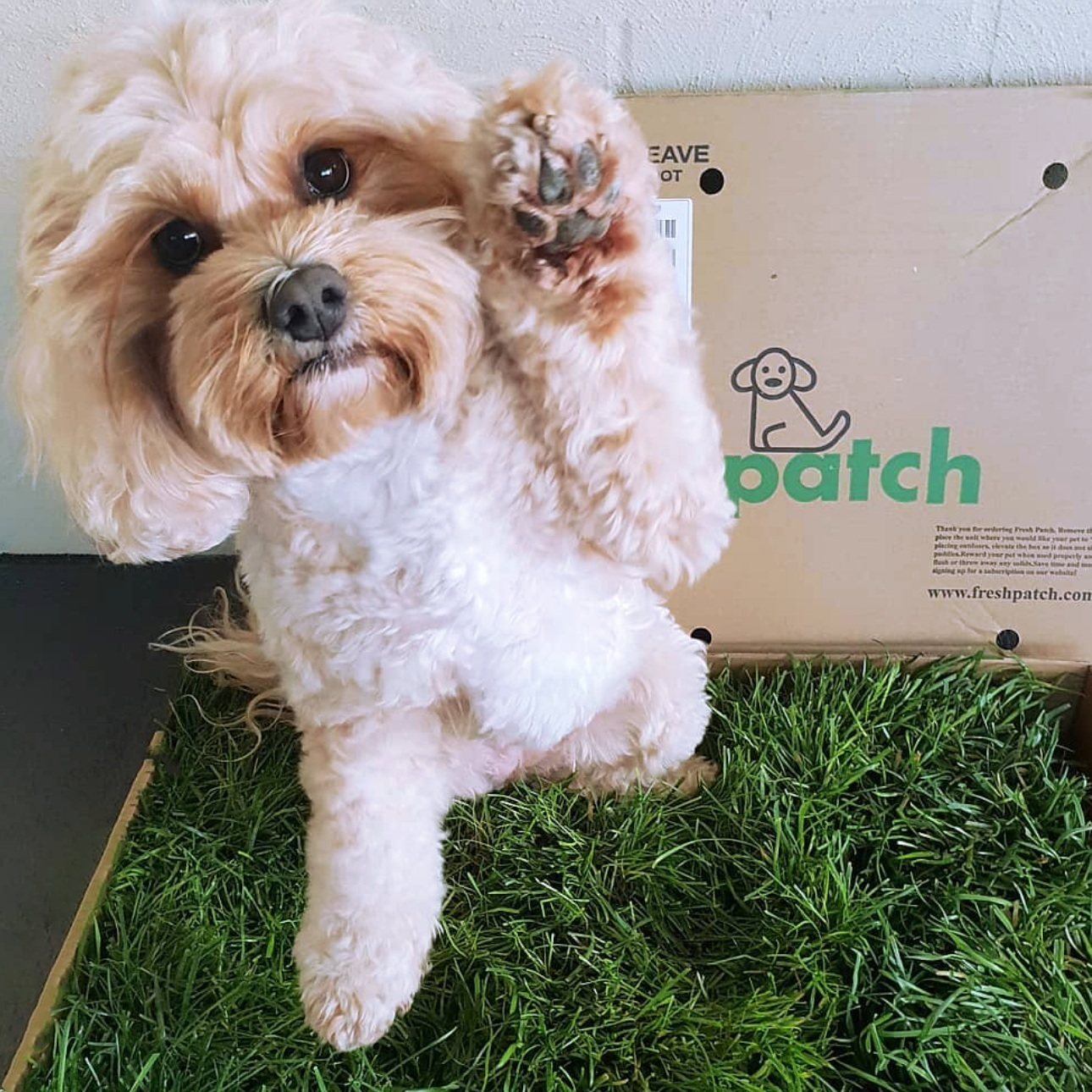 We Dig: Fresh Patch - You may have seen Fresh Patch grass at Dig dog-friendly indoor events across the country! Here are six reasons why we dig disposable, indoor dog potties with real grass. Read More
