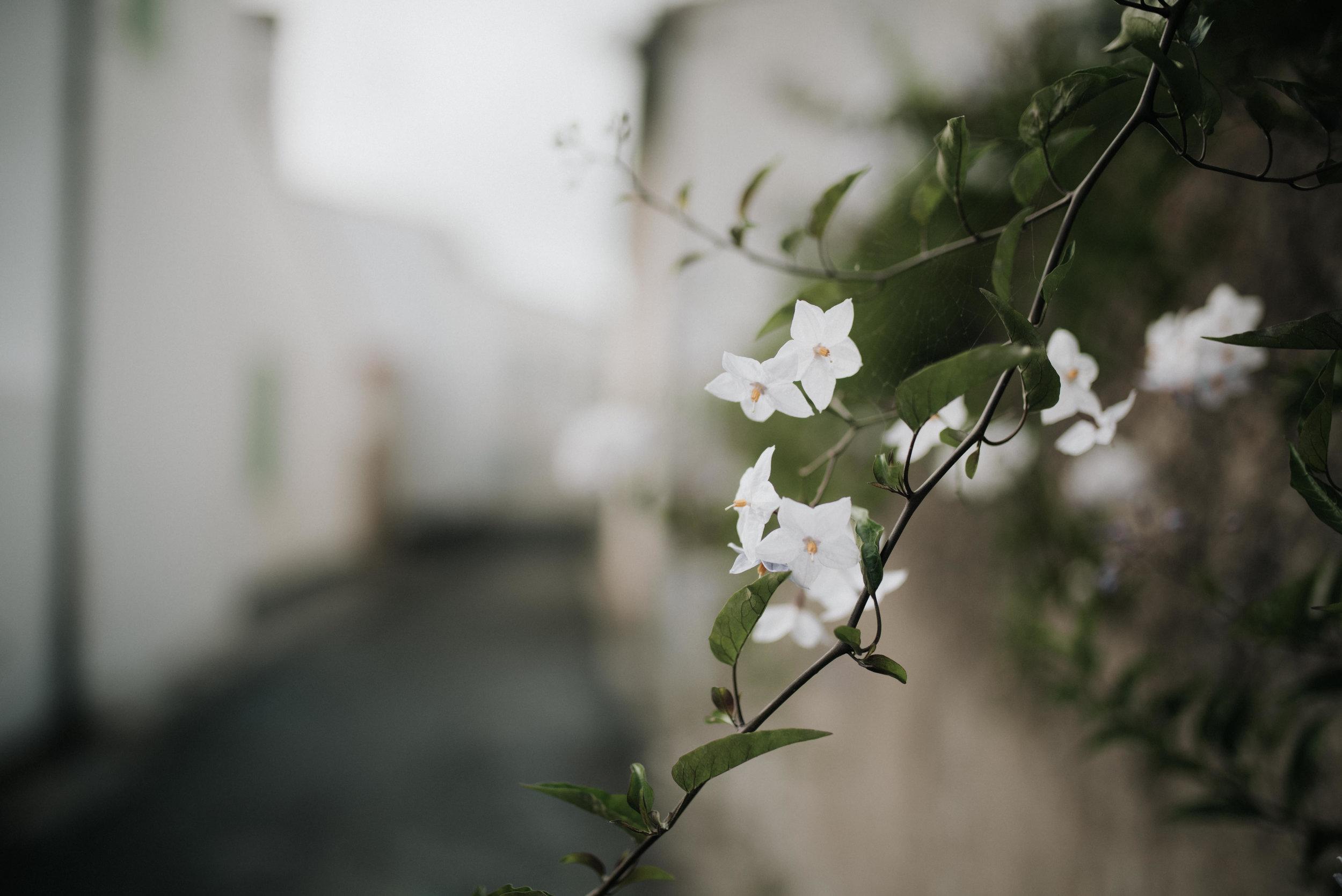 Léa-Fery-photographe-professionnel-lyon-rhone-alpes-portrait-creation-mariage-evenement-evenementiel-famille-2487.jpg