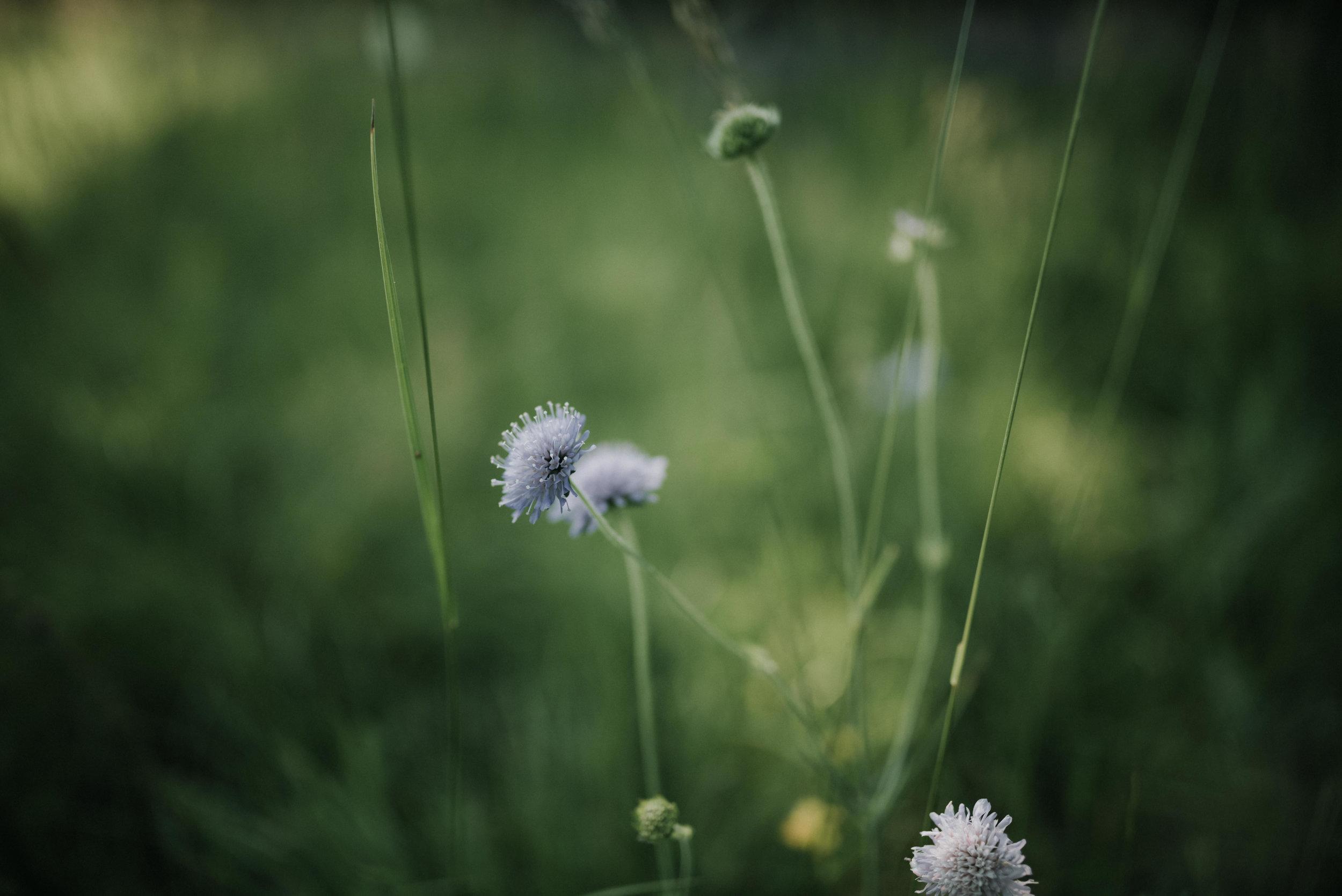Léa-Fery-photographe-professionnel-lyon-rhone-alpes-portrait-creation-mariage-evenement-evenementiel-famille-0339.jpg