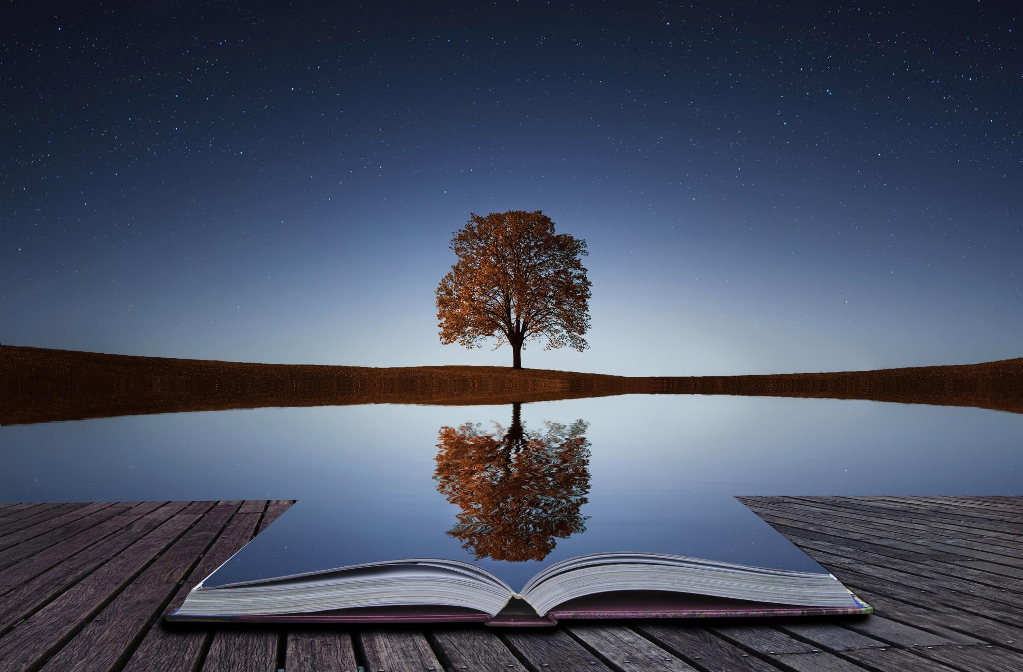tree-reflection.jpg