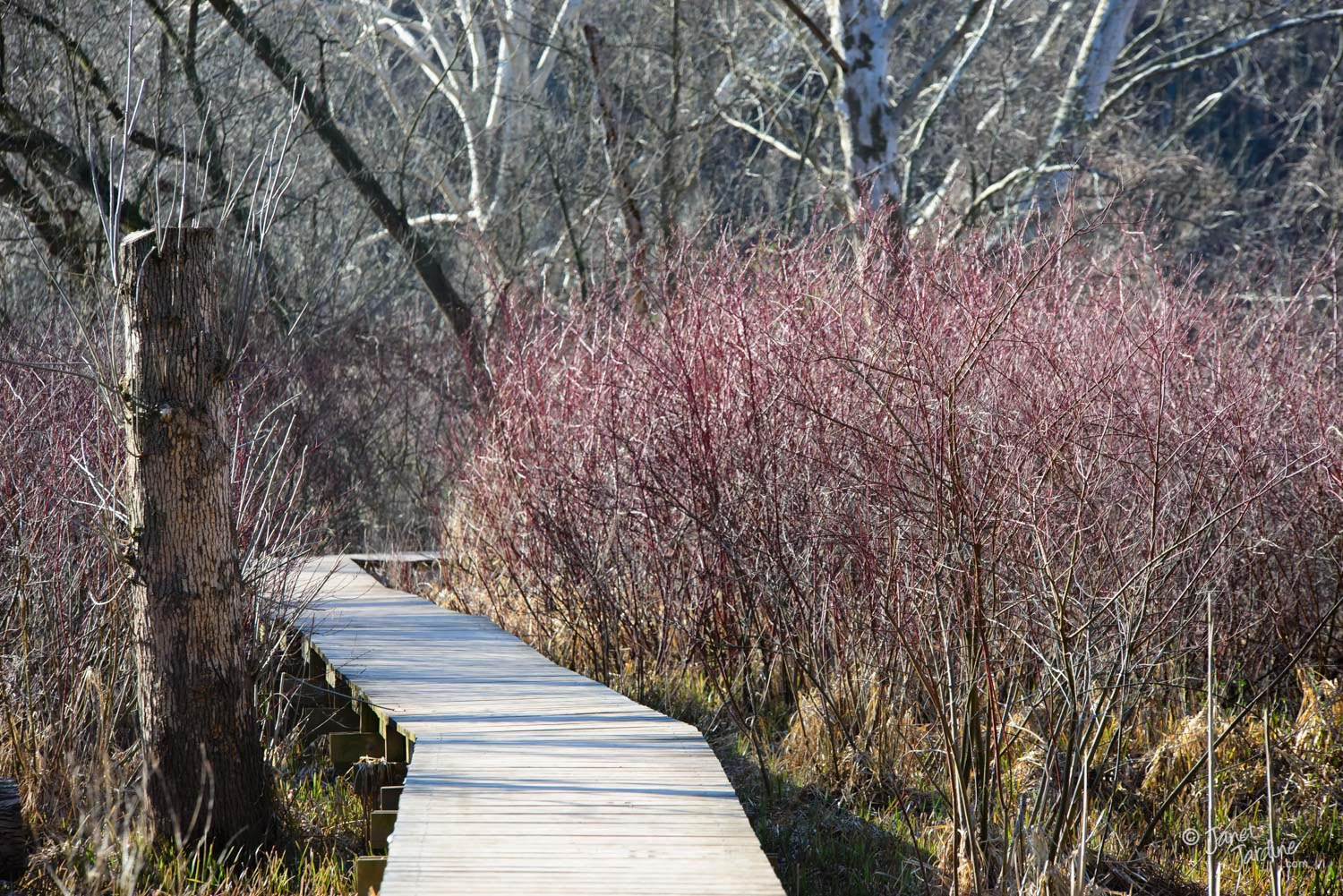 Marsh-boardwalk-in-the-Spring_Photo_copyright_Janet_Jardine.jpg