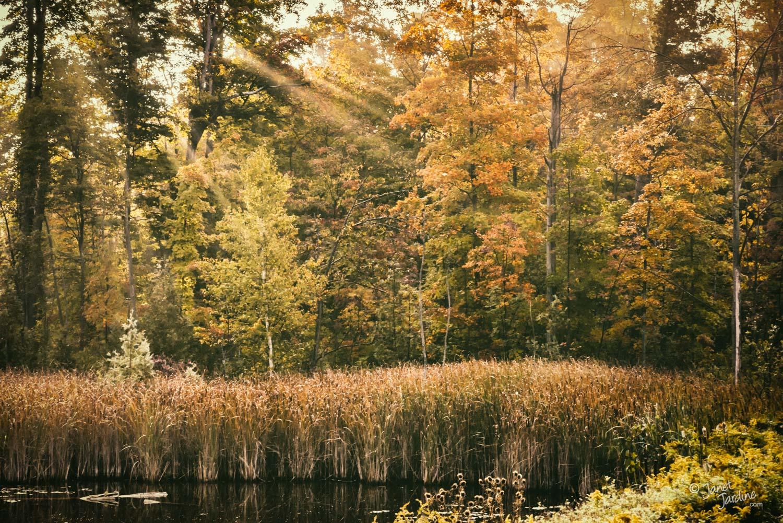 Autumn-Rays_Photo_copyright_Janet_Jardine.jpg