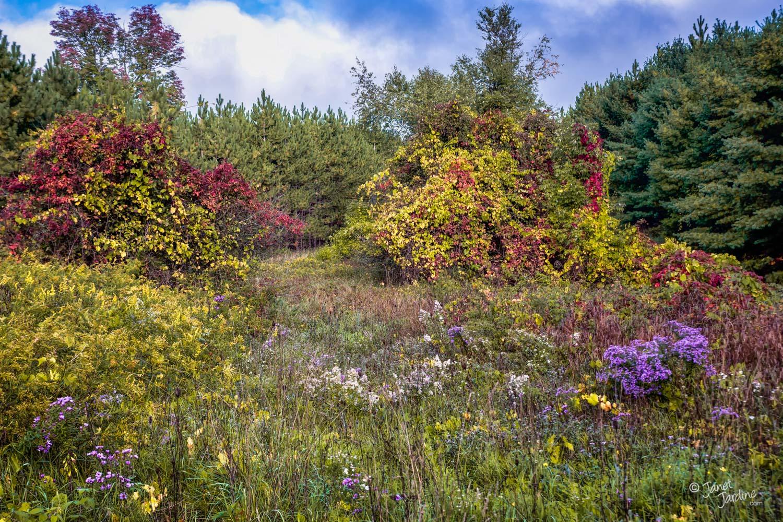 Autumn-Palette_Photo_copyright_Janet_Jardine.jpg
