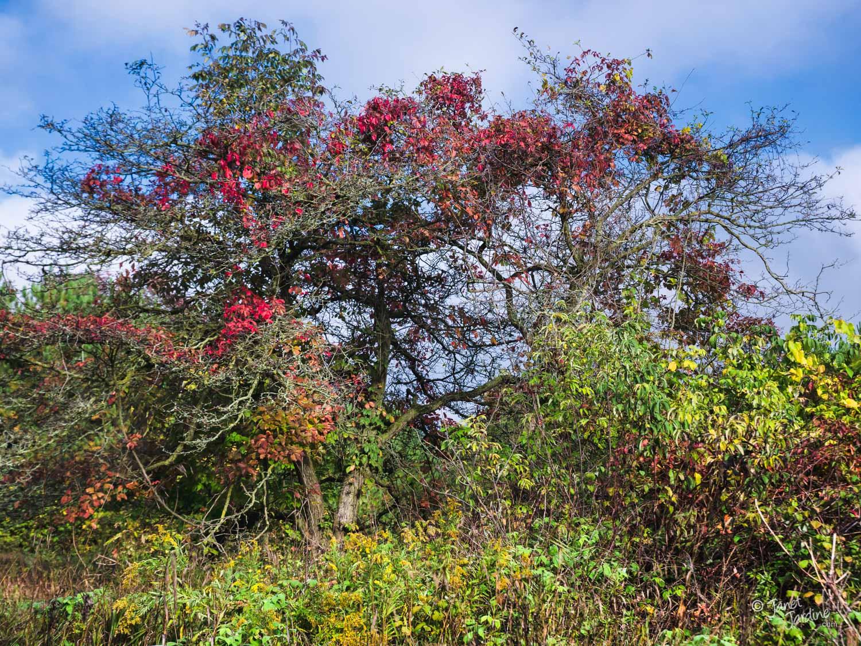 Colourful-Tangle_Photo_copyright_Janet_Jardine.jpg