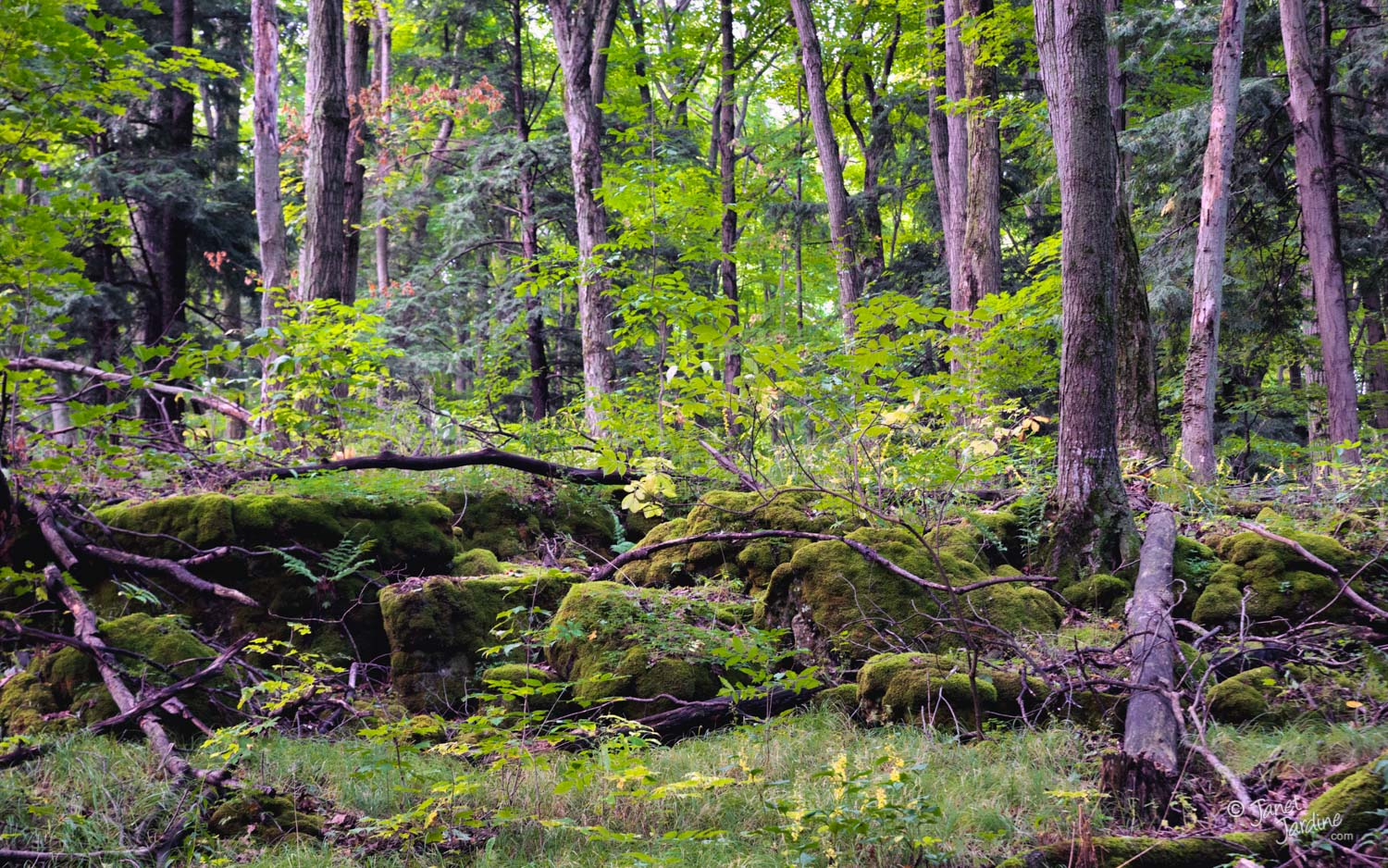 Early-Autumn-Forest--Crawford-Lake-Conservation-Area_Photo_copyright_Janet_Jardine.jpg