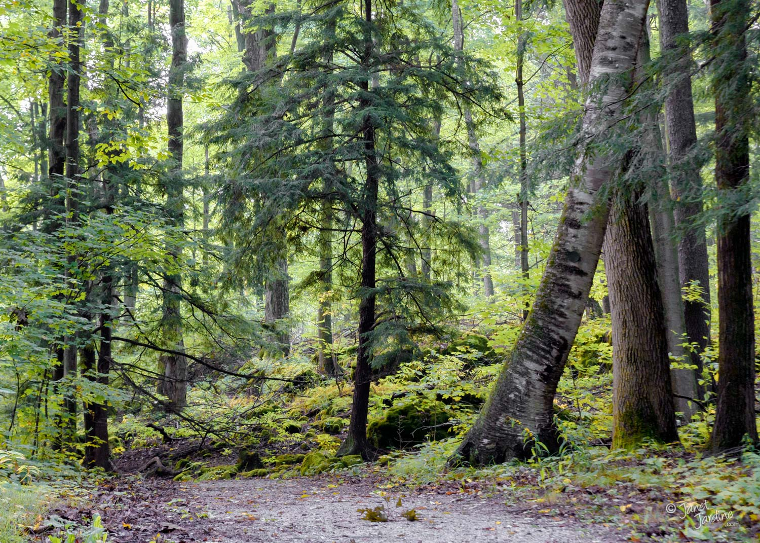 Forest-Greens--Early-Autumn_Photo_copyright_Janet_Jardine.jpg