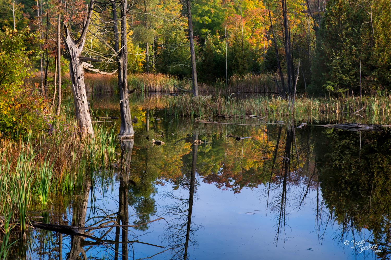 Something-to-Reflect-Upon_Photo_copyright_Janet_Jardine.jpg