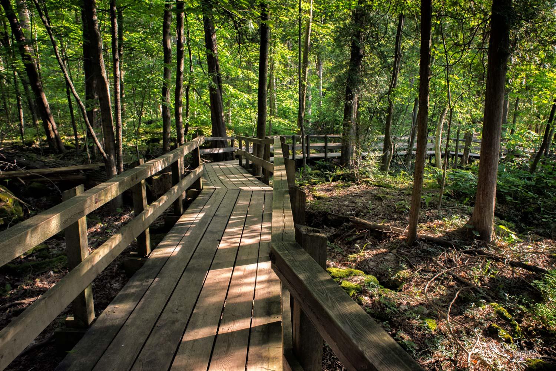 Crawford-Lake-Boardwalk_Photo_copyright_Janet_Jardine.jpg