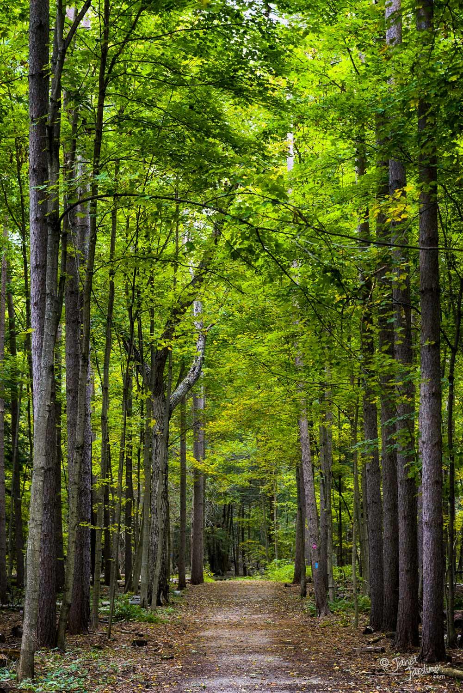 Crawford-Lake-Trail--Conservation-Halton_Photo_copyright_Janet_Jardine.jpg