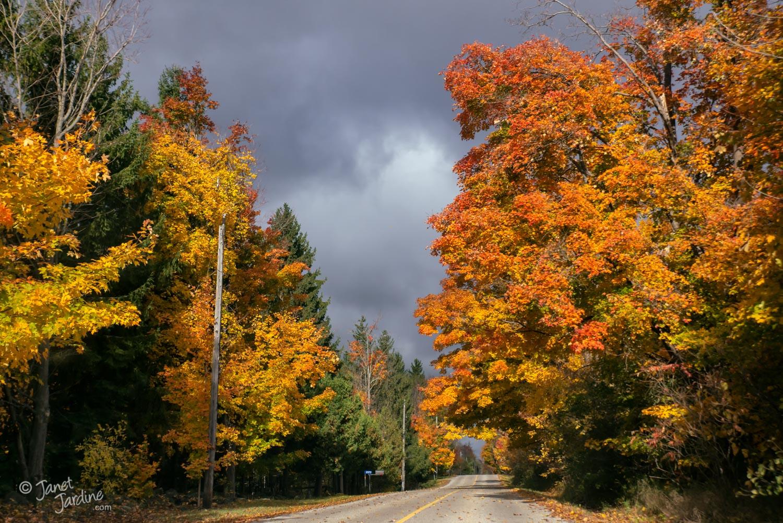 Autumn-Drive_Photo_copyright_Janet_Jardine_SquareSpace.jpg