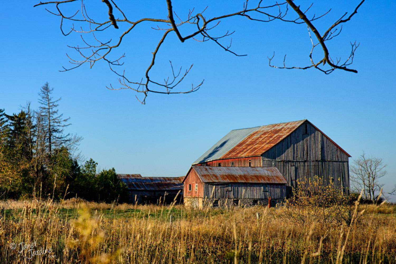 Autumn-Farm_Photo_copyright_Janet_Jardine_SquareSpace.jpg
