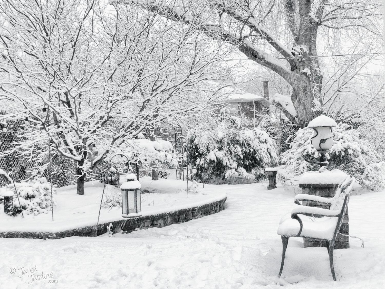 Winter-Garden-View_Photo_copyright_Janet_Jardine_SquareSpace.jpg