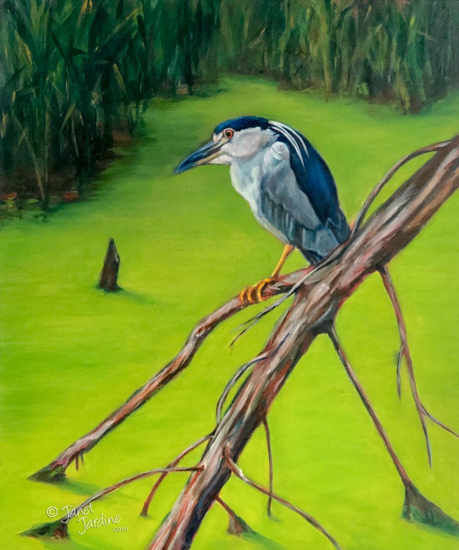 Hendrie Black Crowned Night Heron
