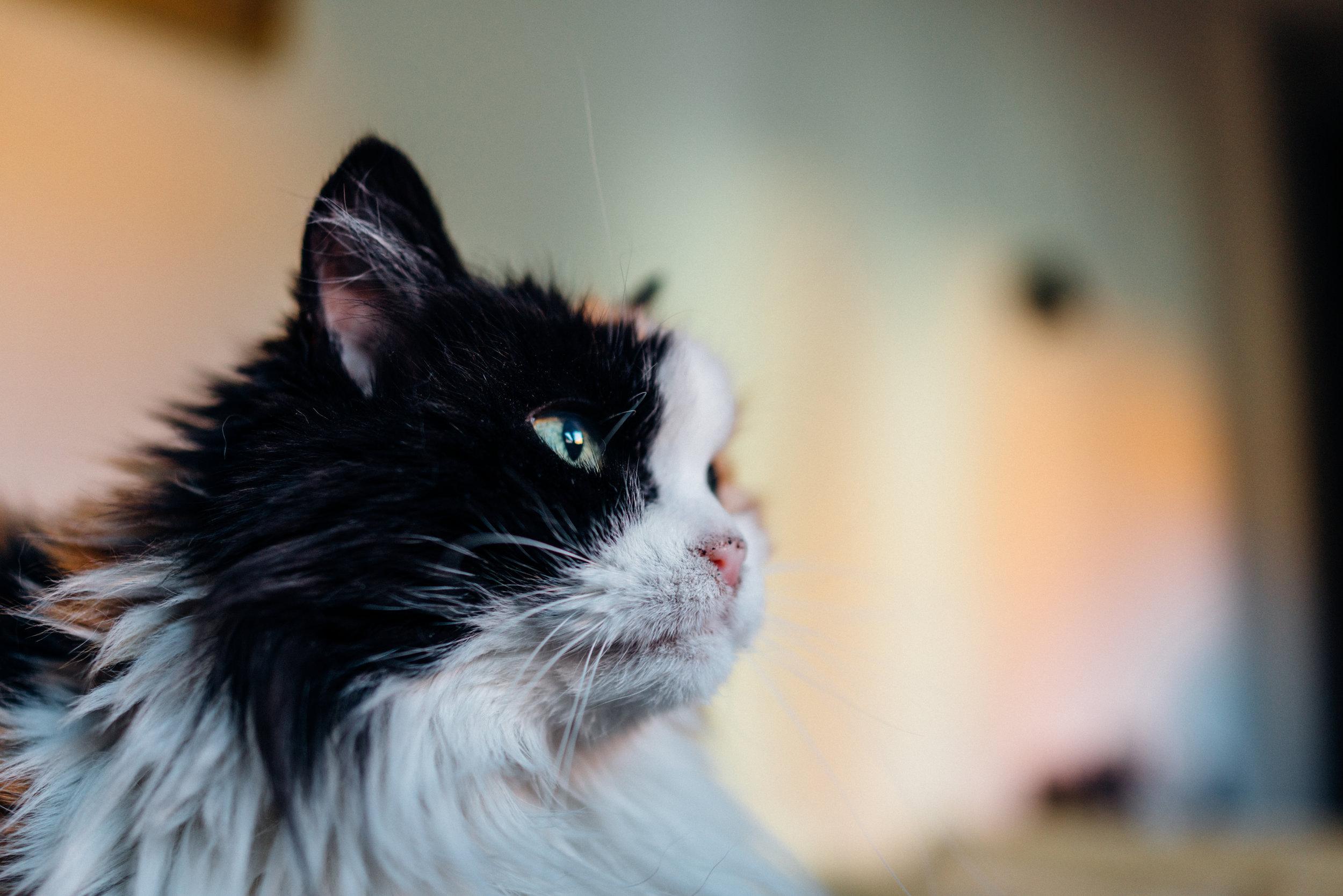 Magò,uno dei gatti di Marina, nella mia stanza