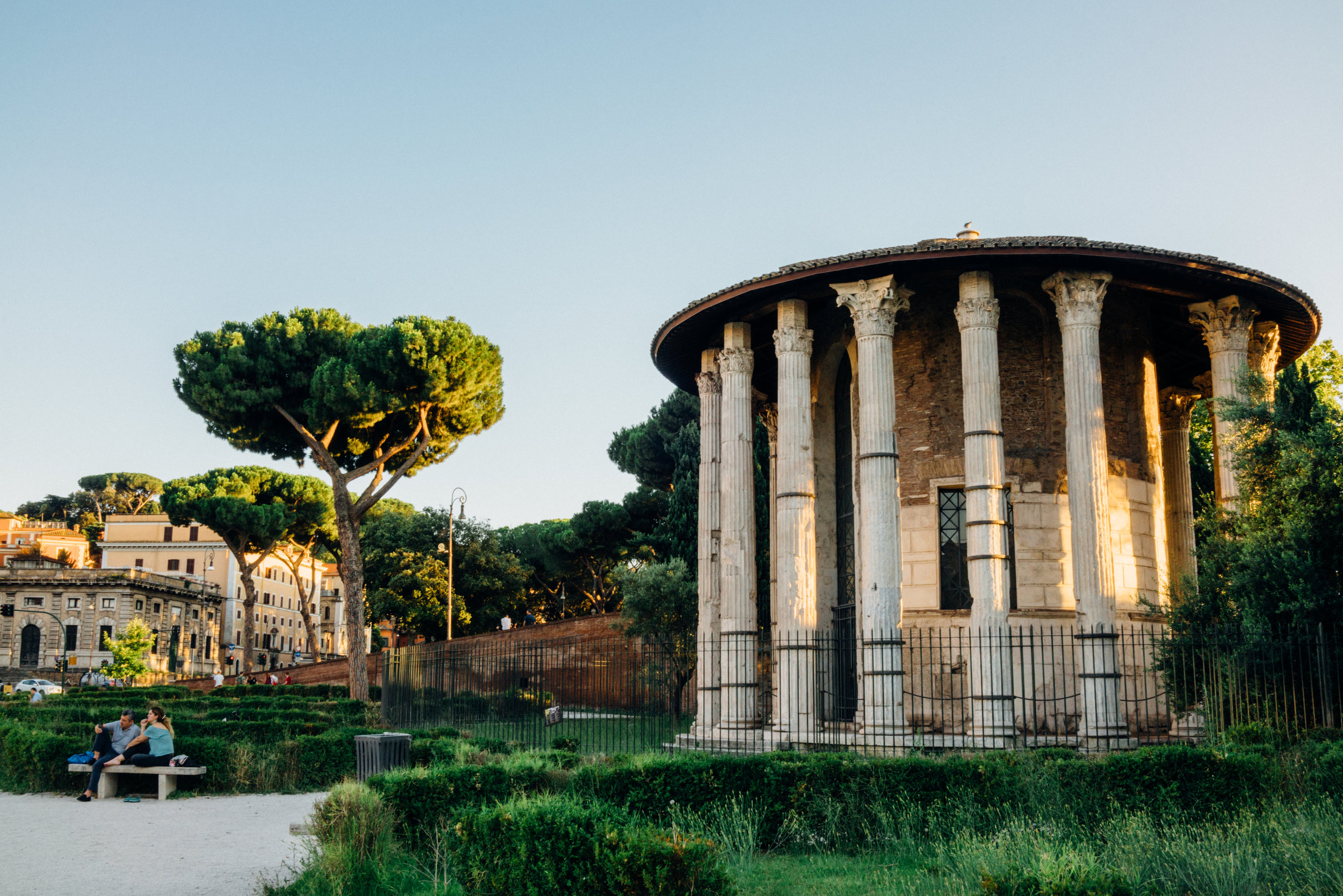 Maritime pine,  Pinus pinaster , is symbolic of Rome.